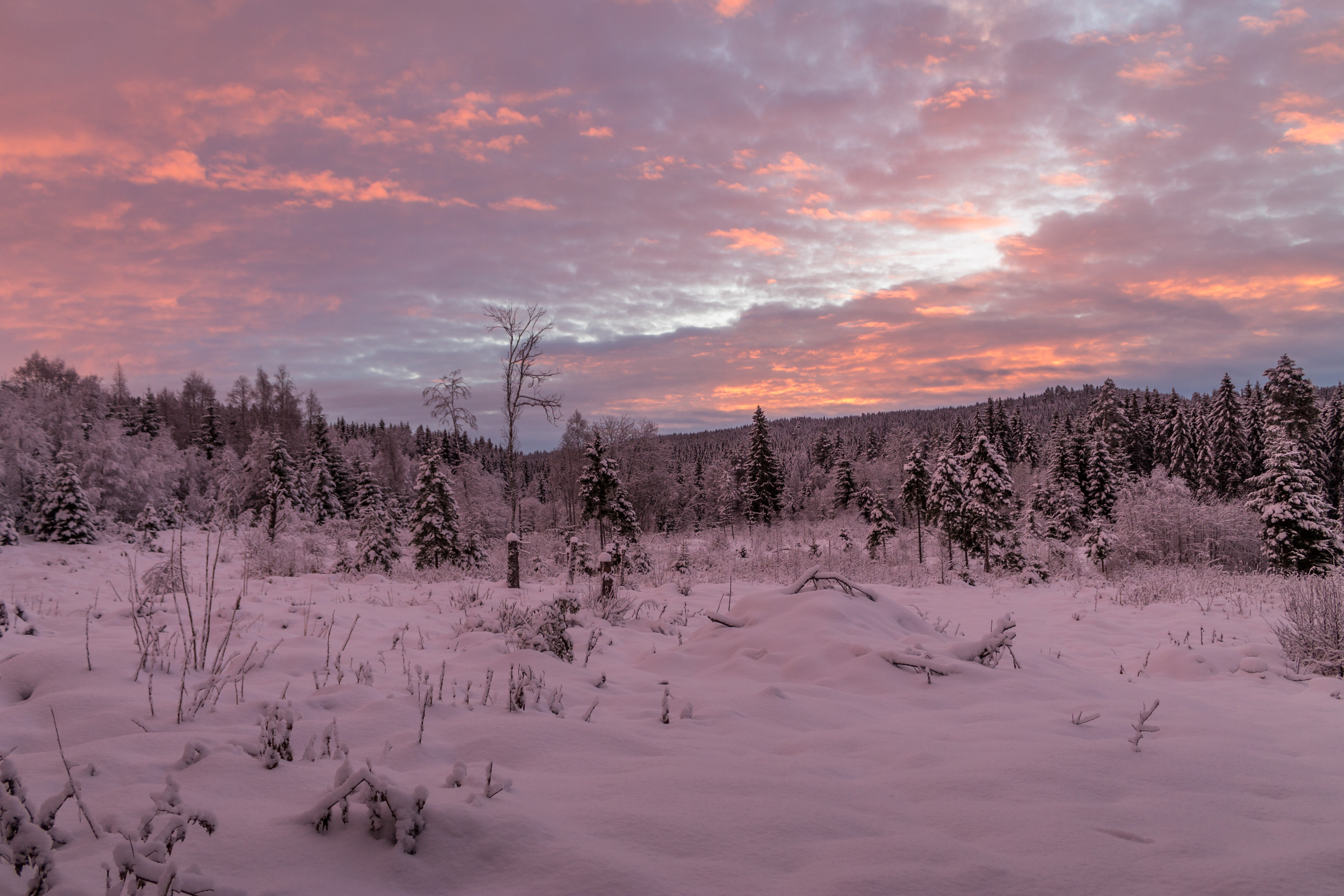 Winter Landscape in the Morning, Wood, Sky, Norway, November, HQ Photo