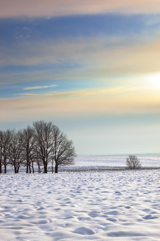 Winter morning, Beautiful, Snowy, Rime, Silence, HQ Photo