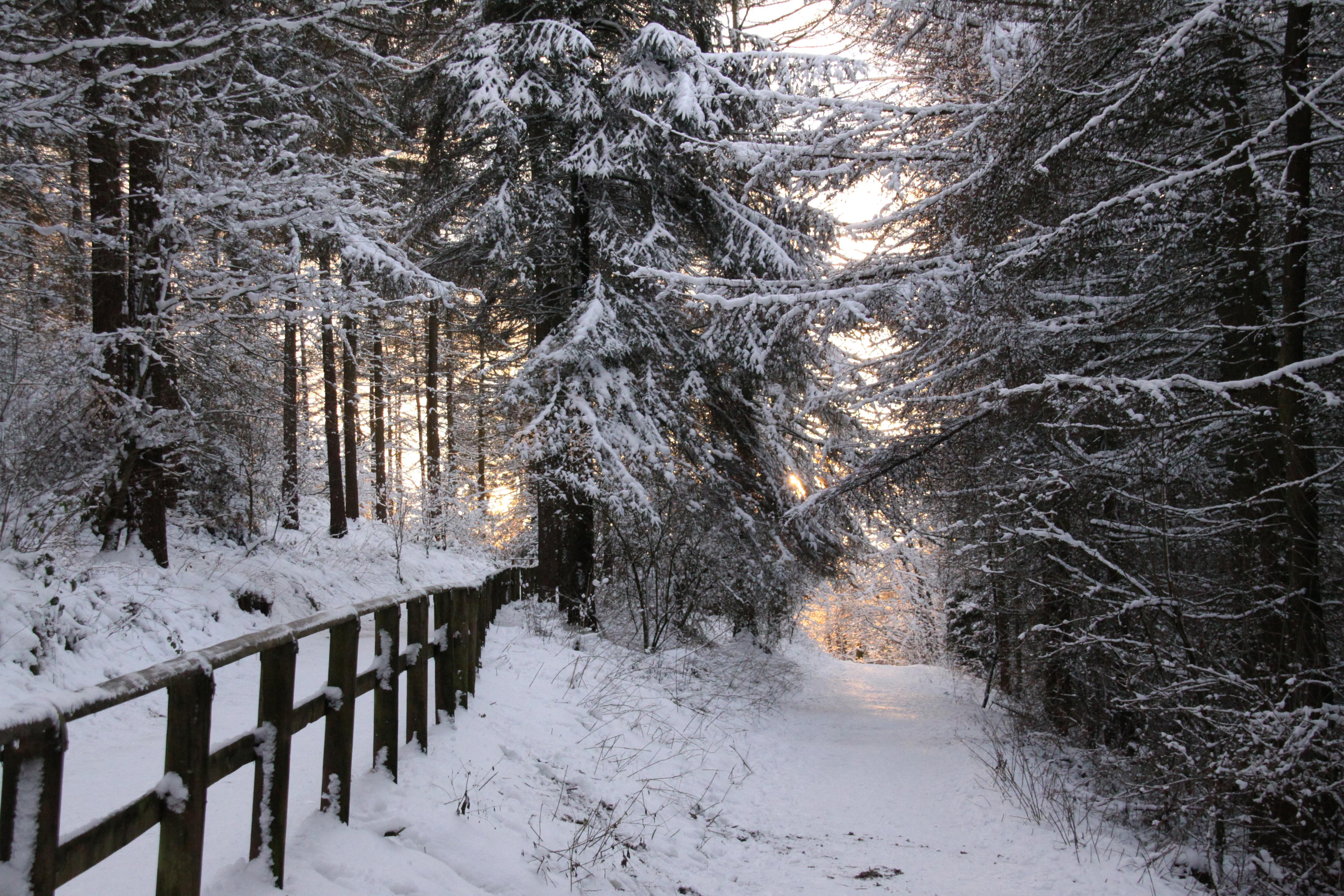 File:Winter path (3258772986).jpg - Wikimedia Commons