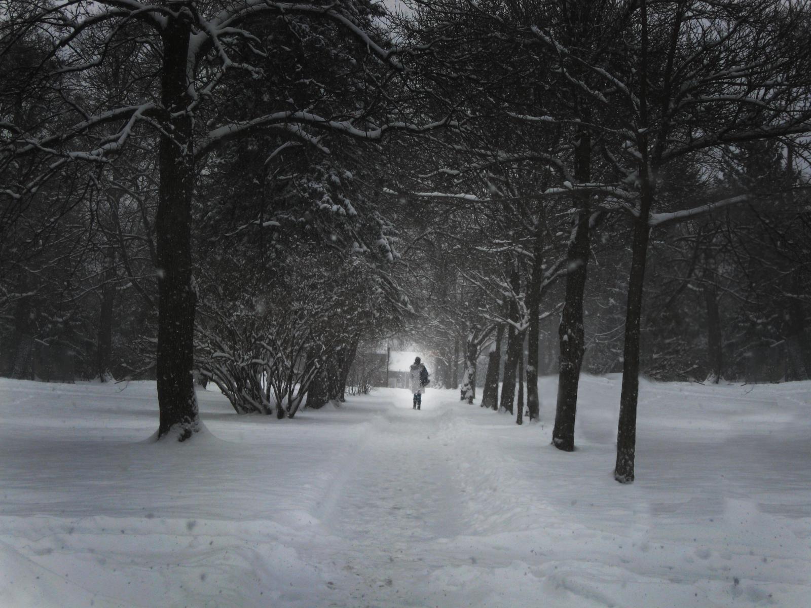 Winter Path by FrukeChan on DeviantArt
