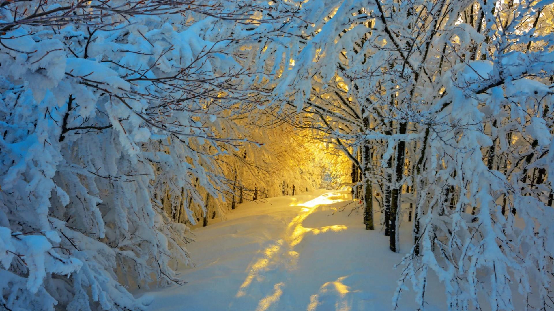 Snowy Path In Winter Sunlight Wallpaper | Wallpaper Studio 10 | Tens ...