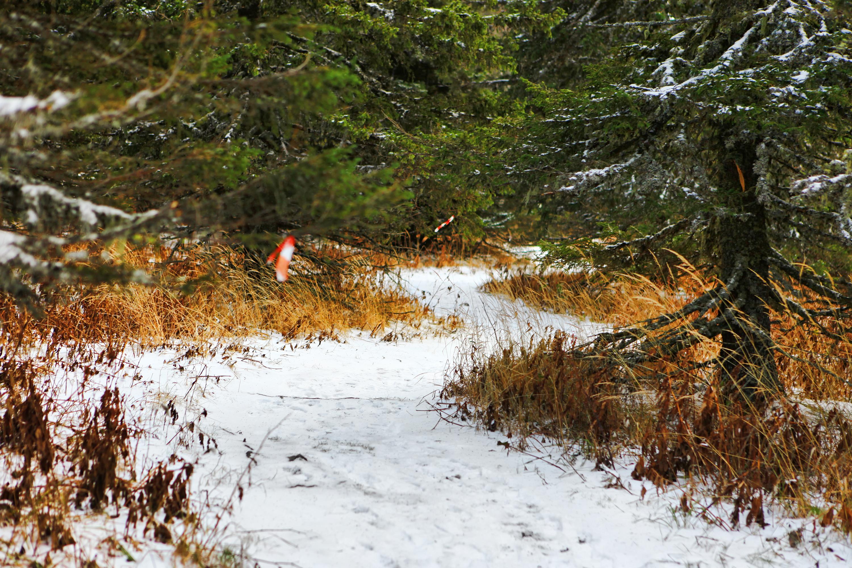 Winter path, Cold, Nature, Path, Snow, HQ Photo