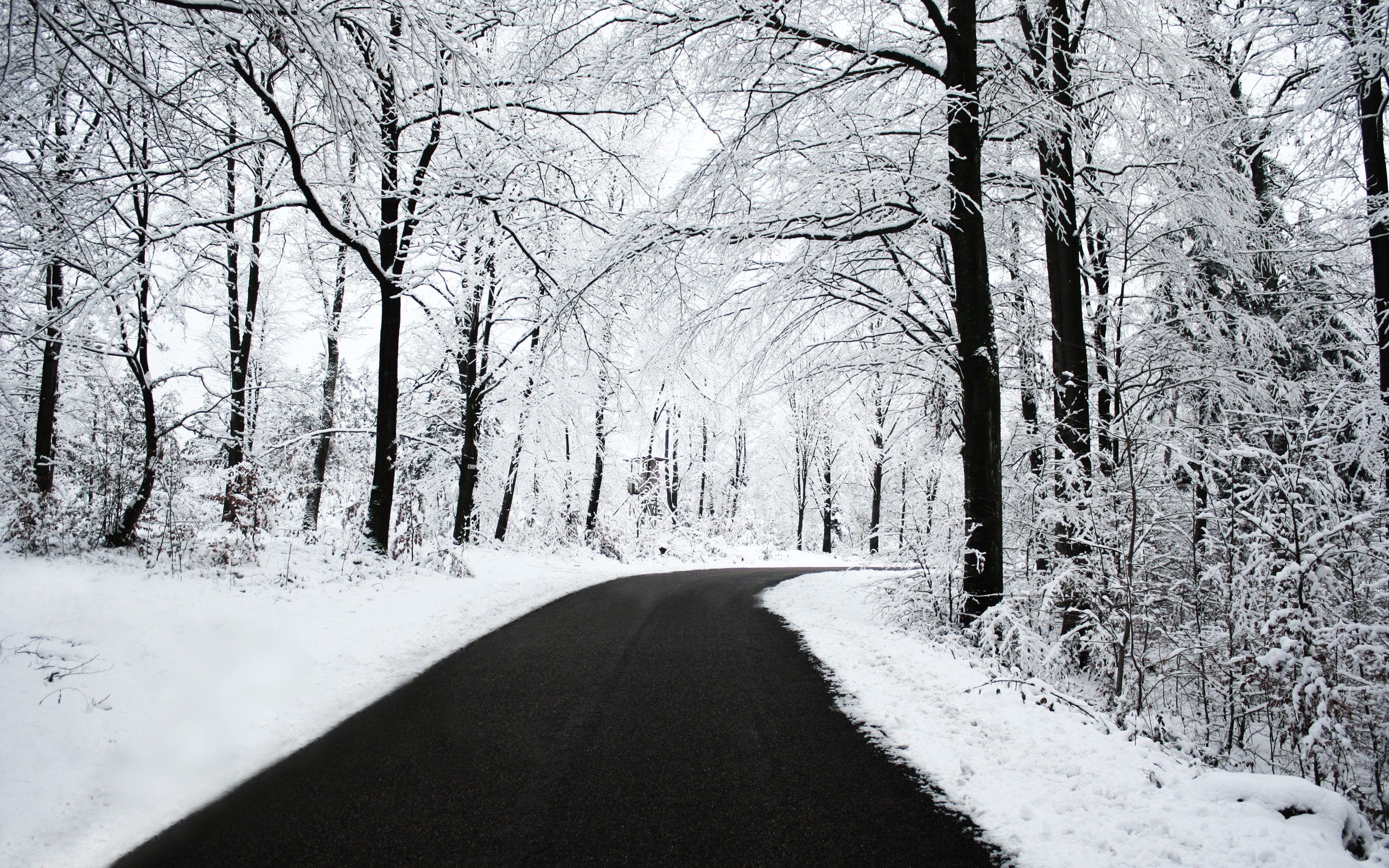 Winter road / 2560 x 1600 / Forest / Photography | MIRIADNA.COM