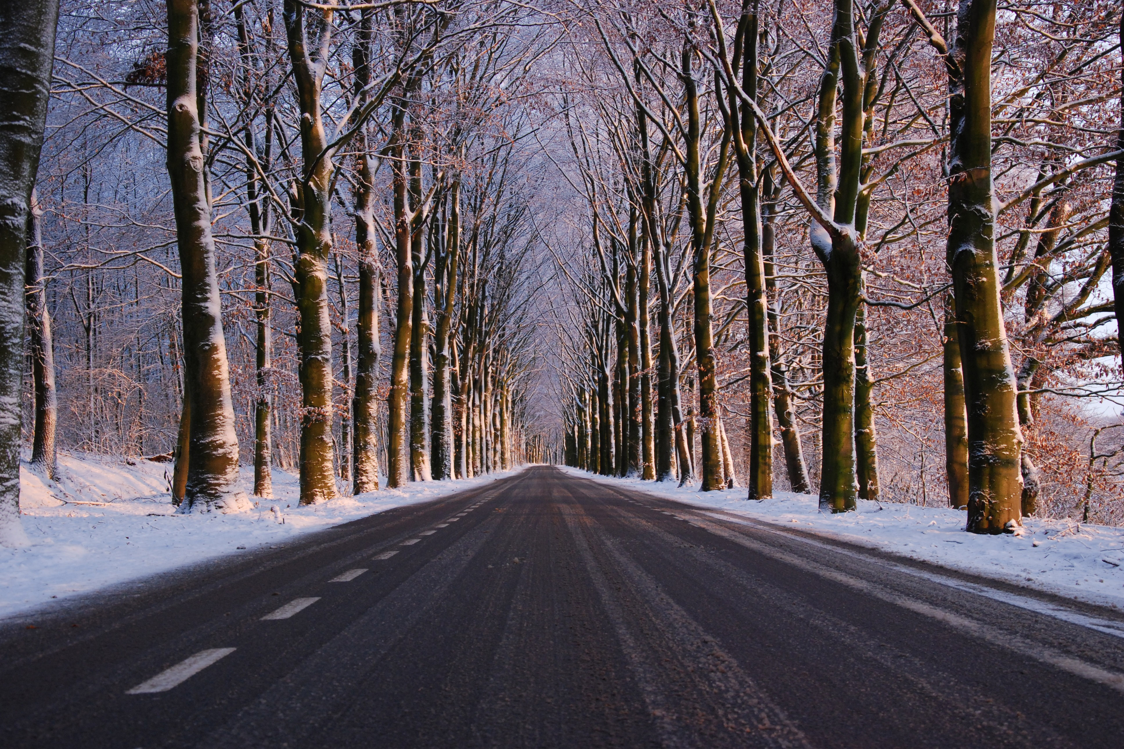Winter Road Free Photo - ISO Republic