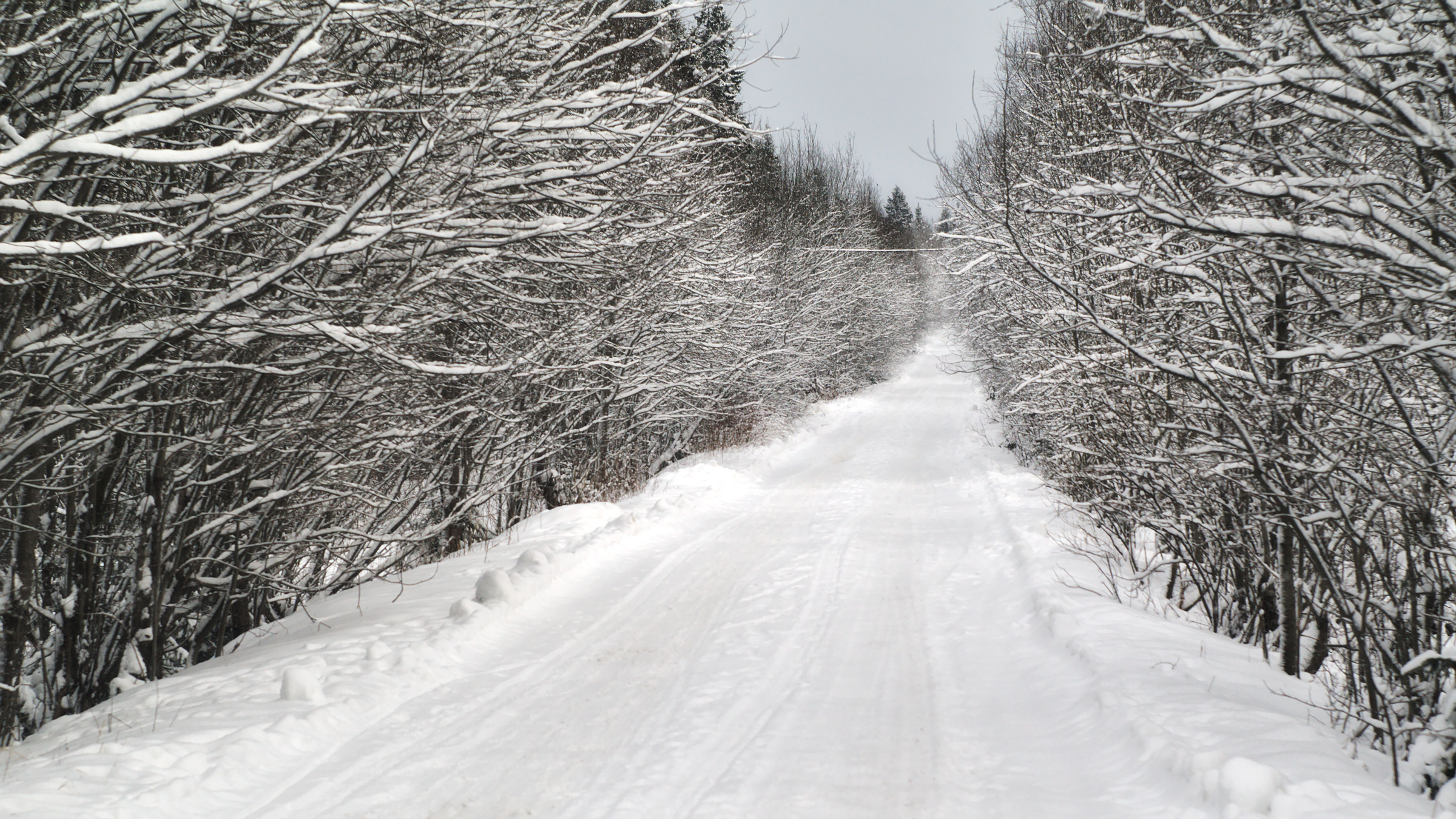 Winter road, Branches, Cold, December, Empty, HQ Photo