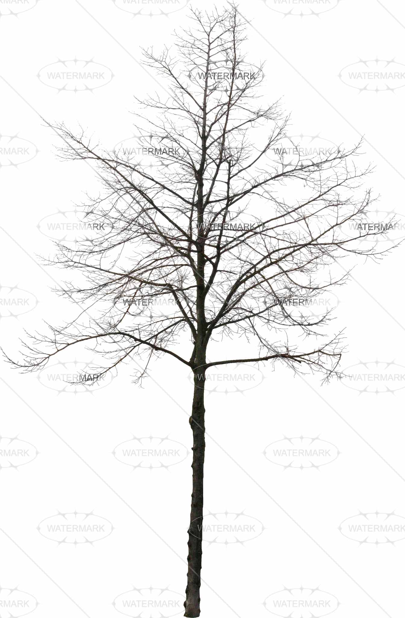 Tree In Winter Drawing at GetDrawings.com | Free for personal use ...