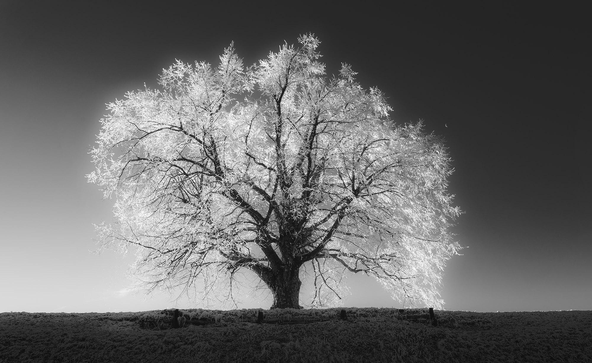 Dreamy Pixel | Big Winter Tree - Dreamy Pixel