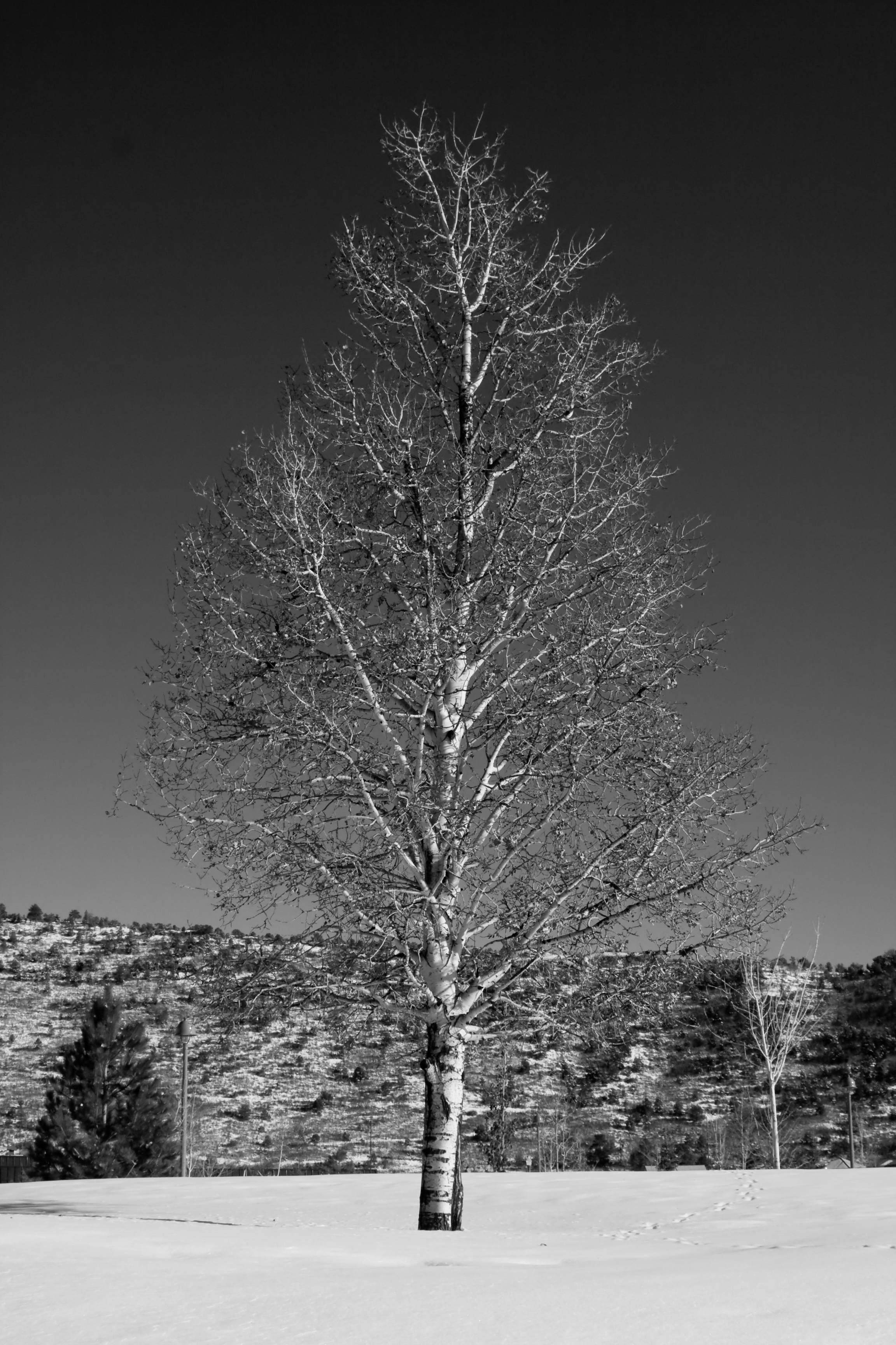 Winter Tree, Cold, Field, Ground, Isolated, HQ Photo
