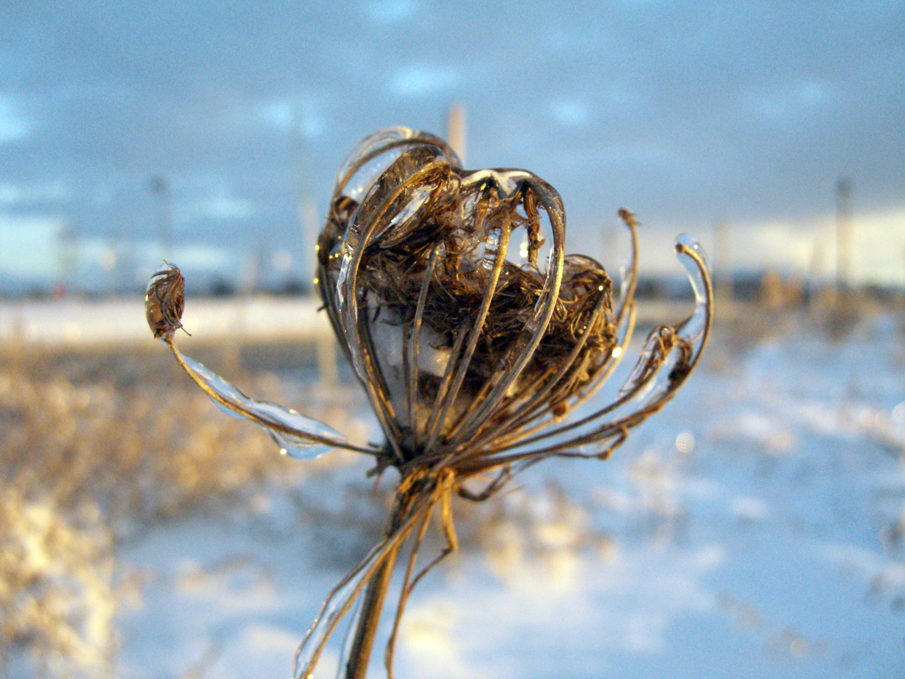 Winter weeds, Bspo06, Ice, Plants, Snow, HQ Photo