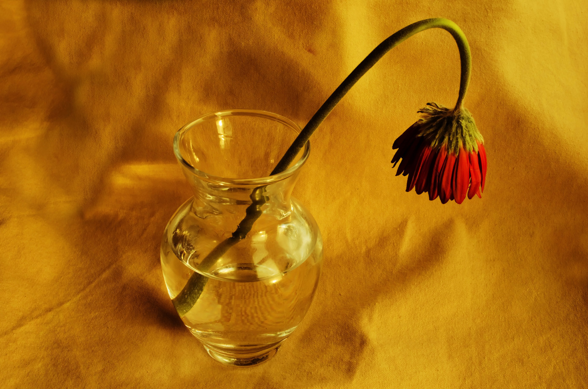 Withered Flower Free Stock Photo - Public Domain Pictures