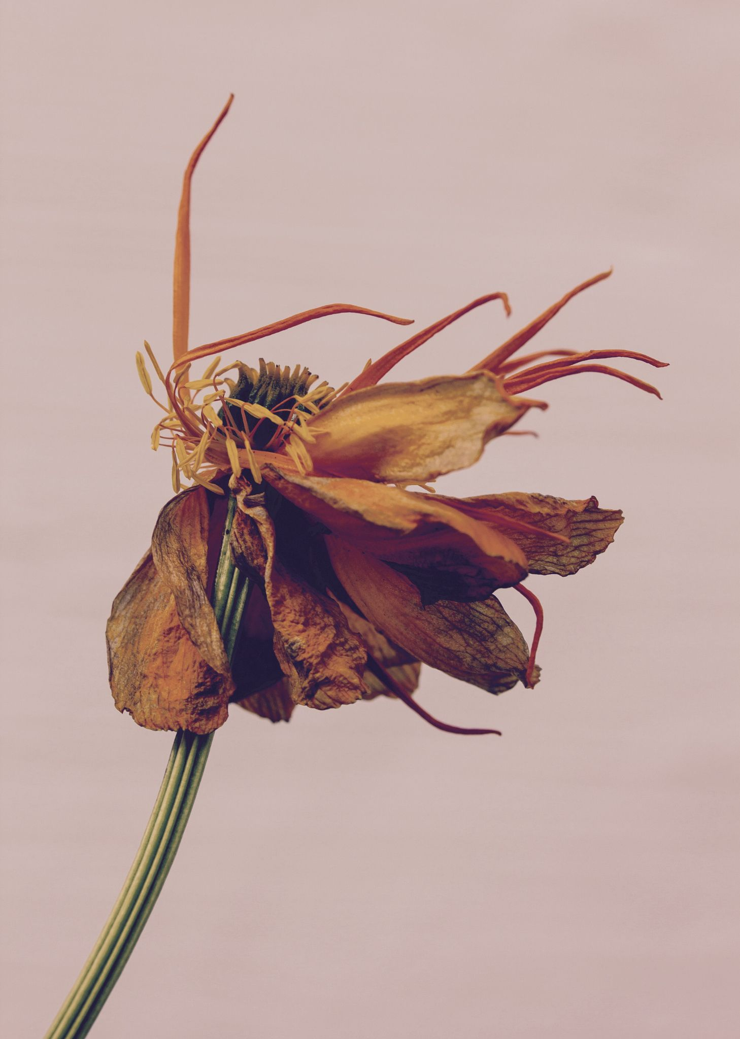 A beautiful withered flower, dancing its last dance... | Wild Honey ...