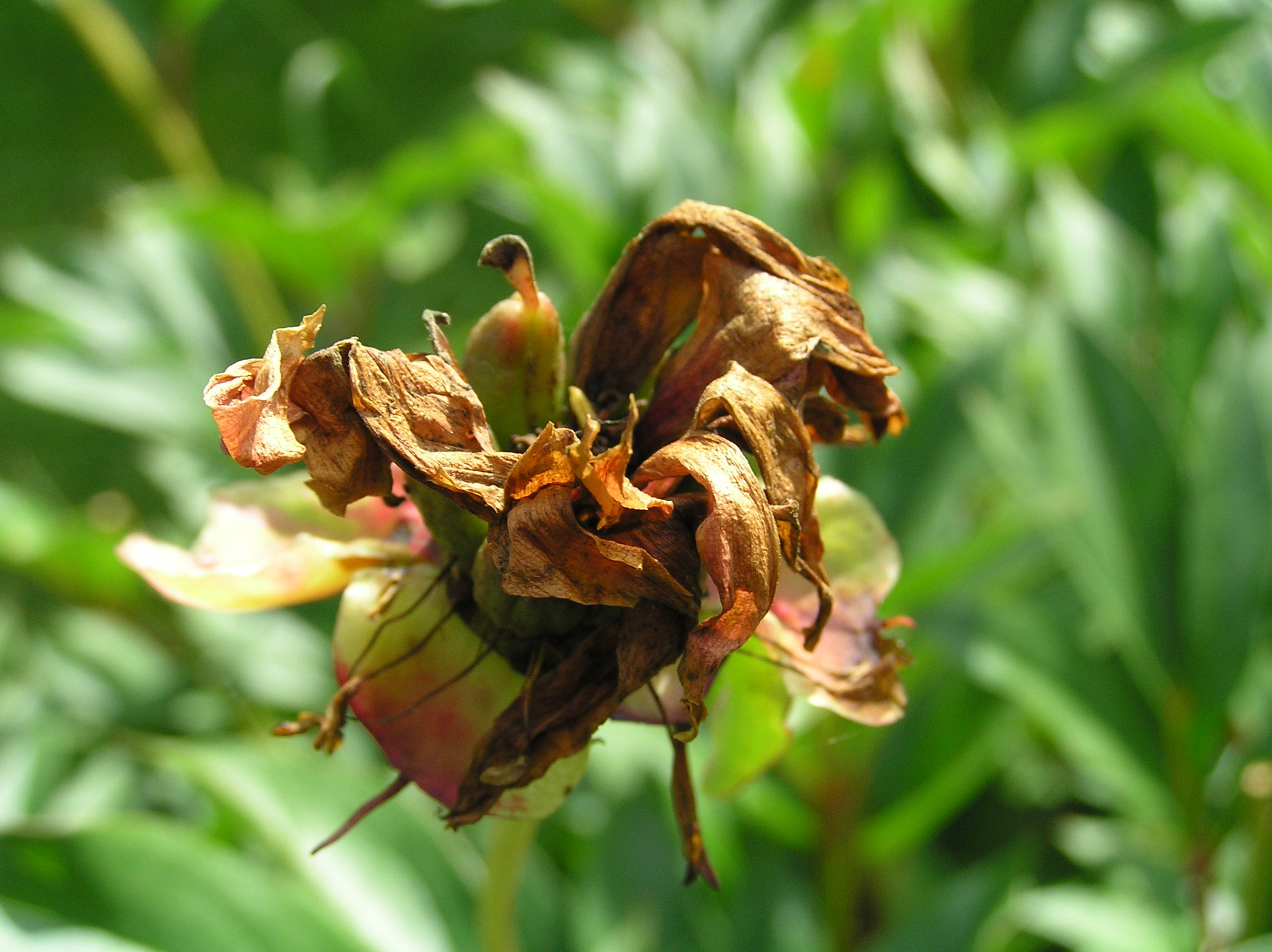 Withered Flower by gnutt on DeviantArt
