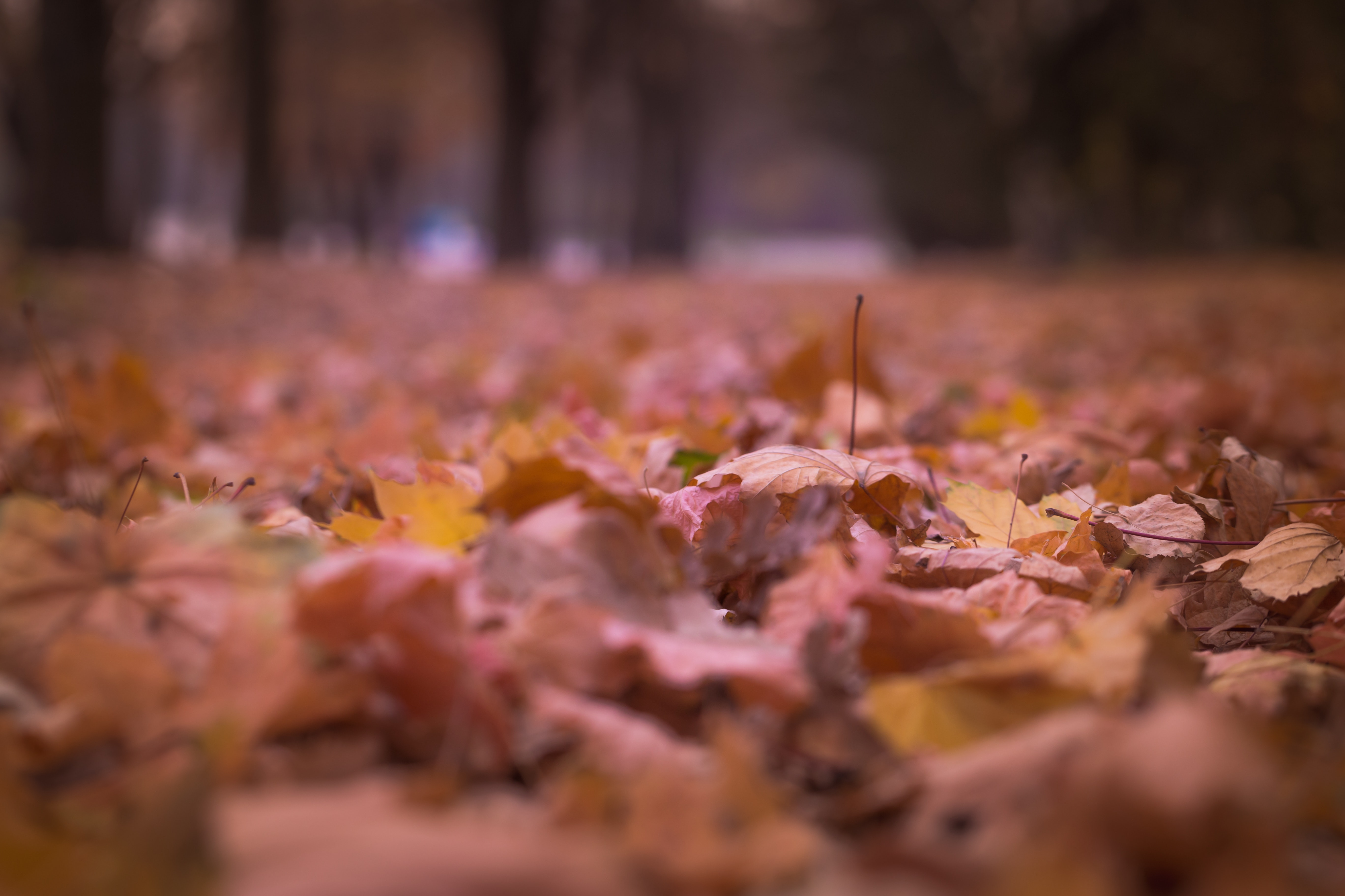 Withered Leaves on Floor Focus Photography, Autumn, Blur, Color, Fall, HQ Photo