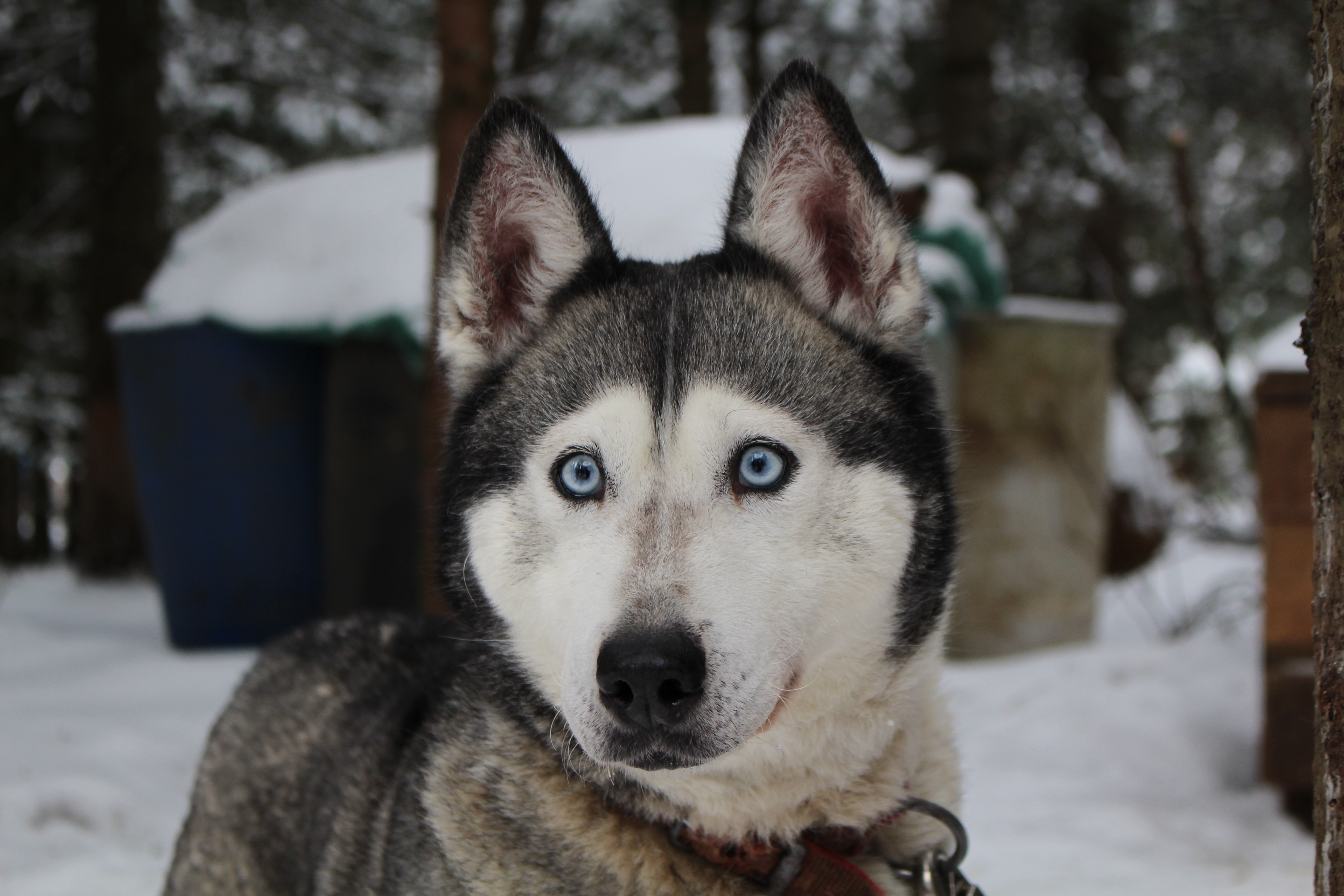 Wolf, Animal, Cold, Dog, Fast, HQ Photo