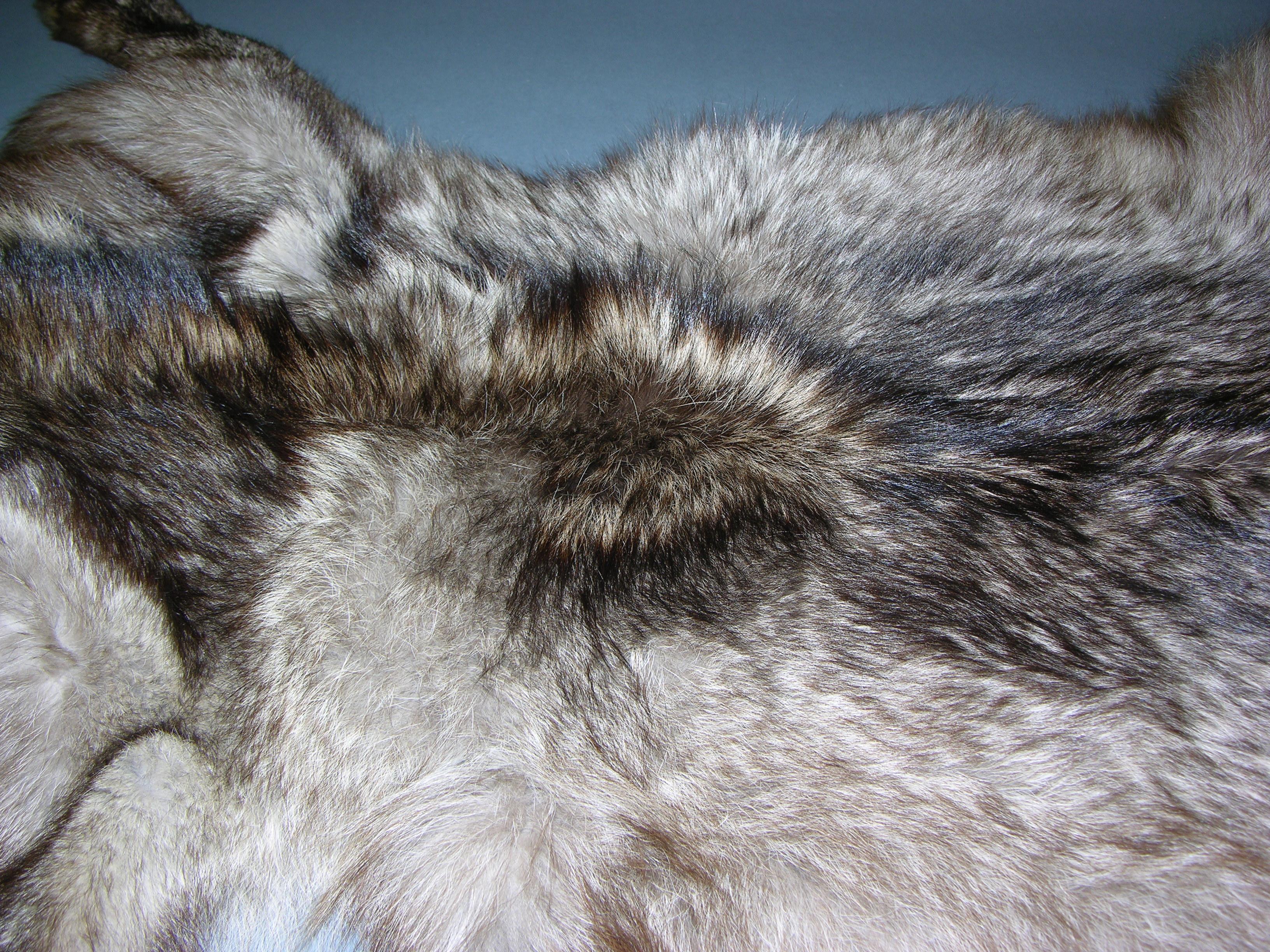 WOLF « Alaska Fur ID Project