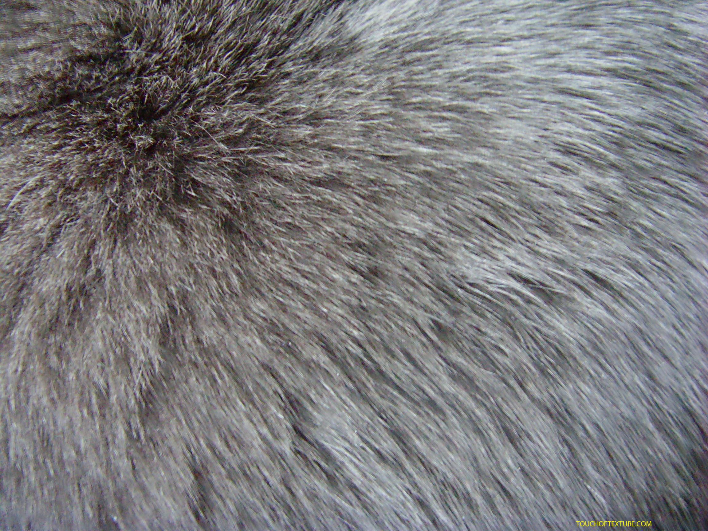 skin, texture fur, wolf fur texture background, background
