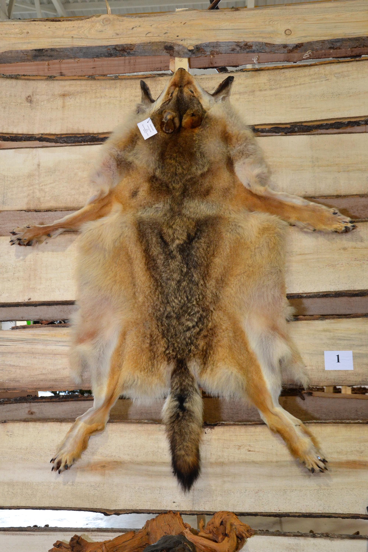 Wolf fur, Anatomy, Preservation, Wild, Vertebrate, HQ Photo