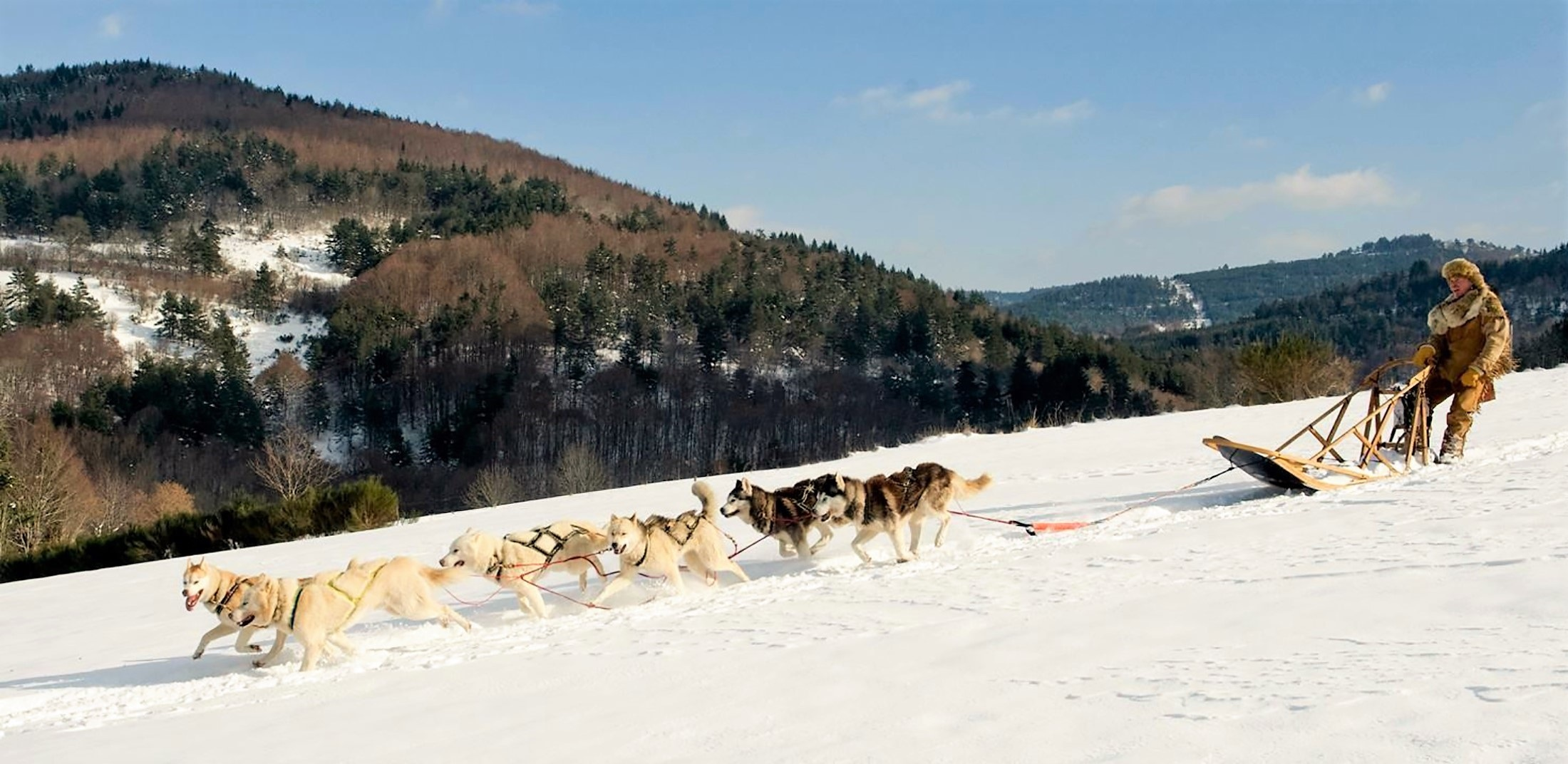 Wolf Ride, Activity, Animal, Frozen, Human, HQ Photo