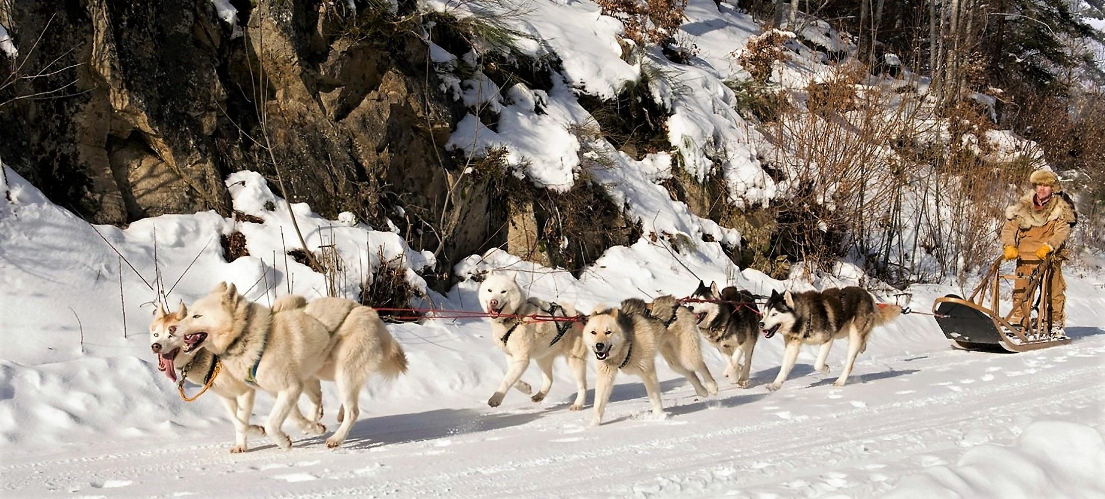 Wolf ride photo