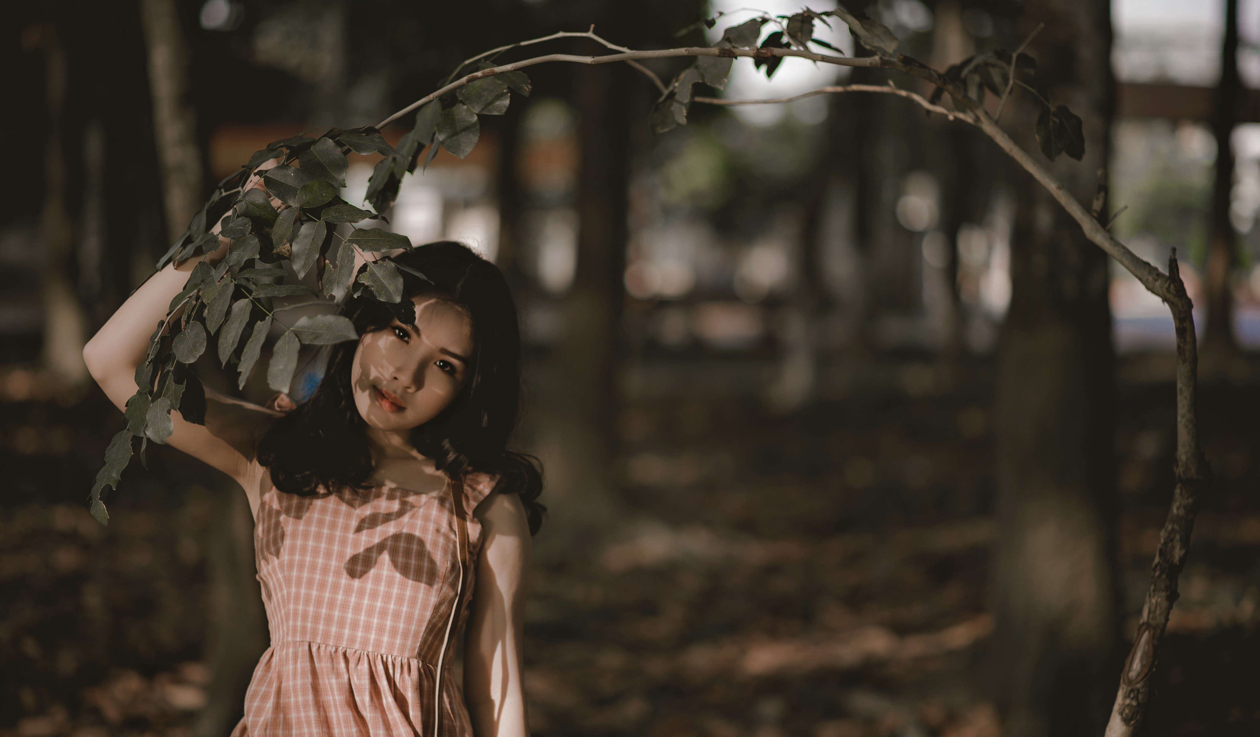 Woman Holding Green Leafed Tree, Beautiful, Park, Wood, Woman, HQ Photo
