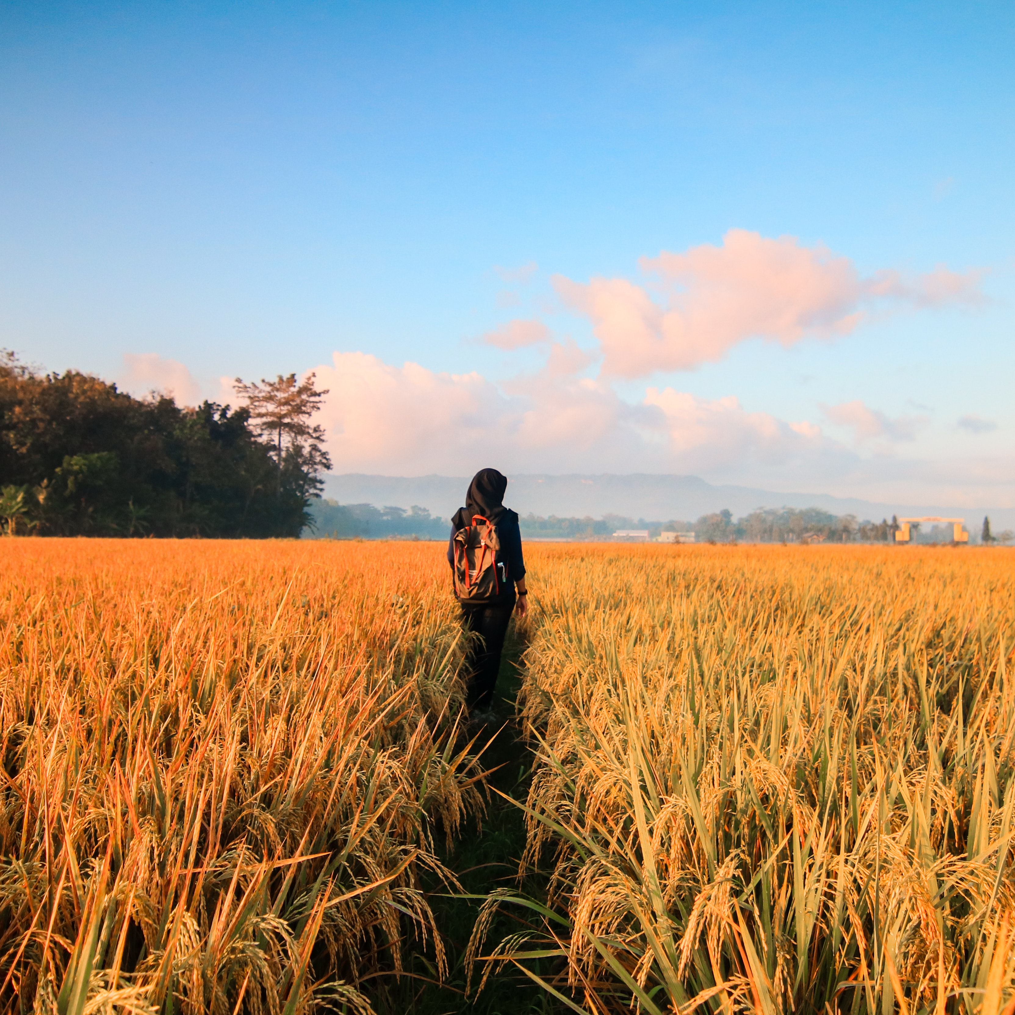 Woman in Black Hijab Headscarf Walking on Field, Adventure, Sunrise, Rice field, Rural, HQ Photo