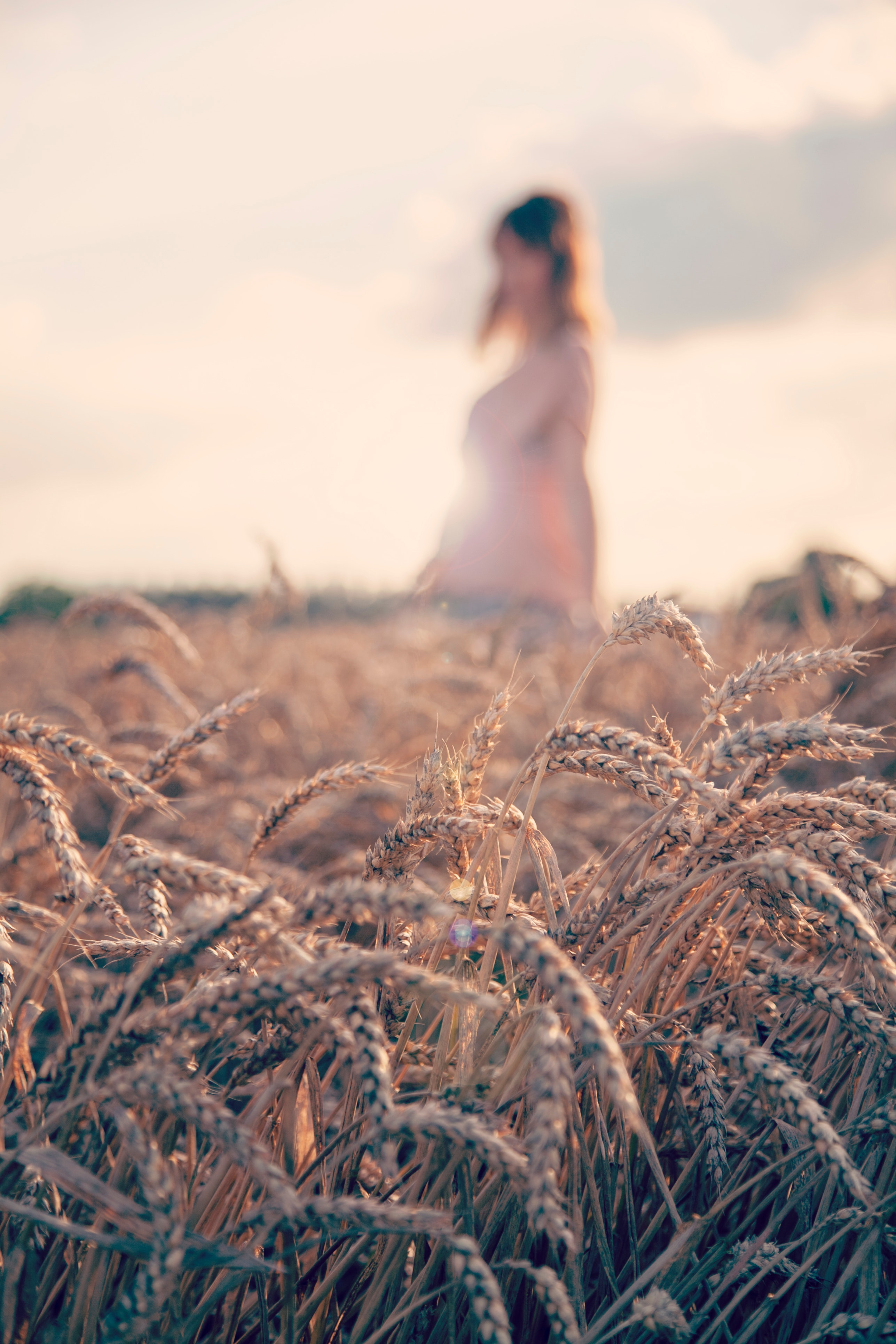 Woman in the Fields, Agriculture, Grain, Sun, Sky, HQ Photo
