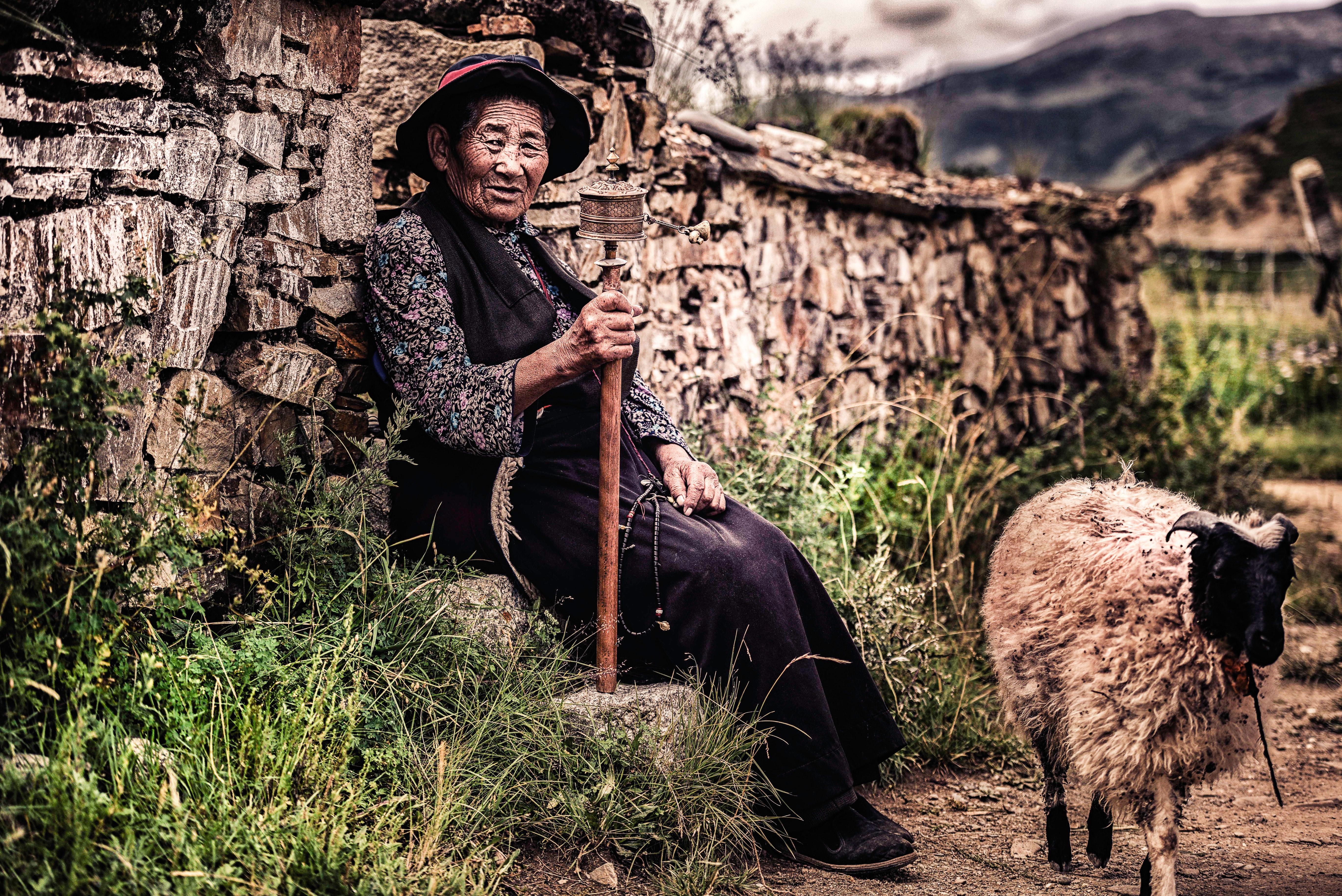 Woman sitting on rock beside wall and near sheep photo