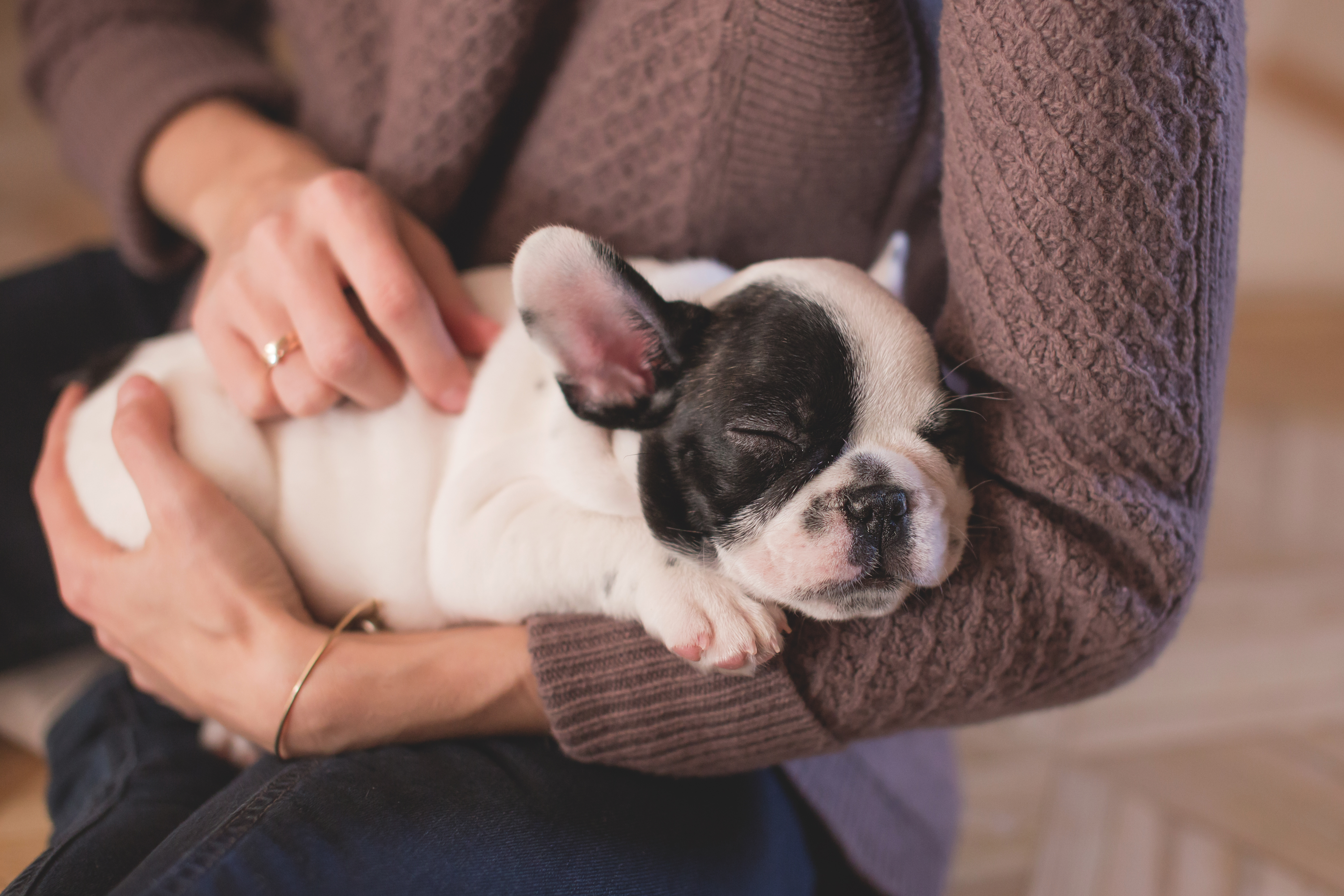 Woman with a puppy, Pup, Pet, Owner, Nap, HQ Photo