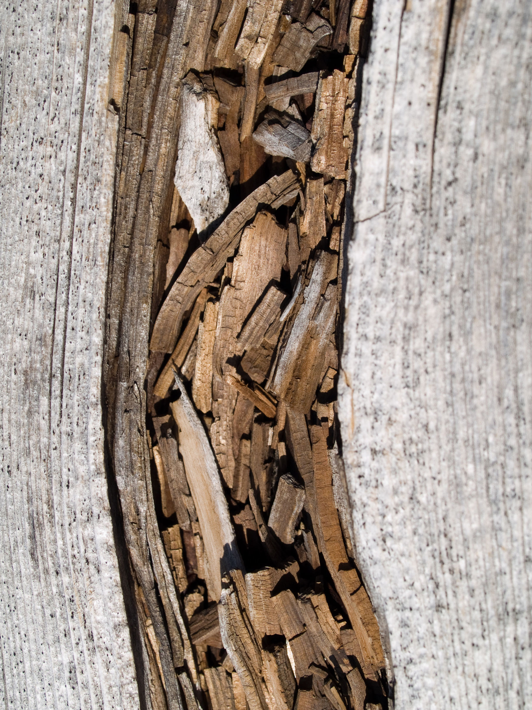 Wood, Aging, Time, Plank, Rot, HQ Photo