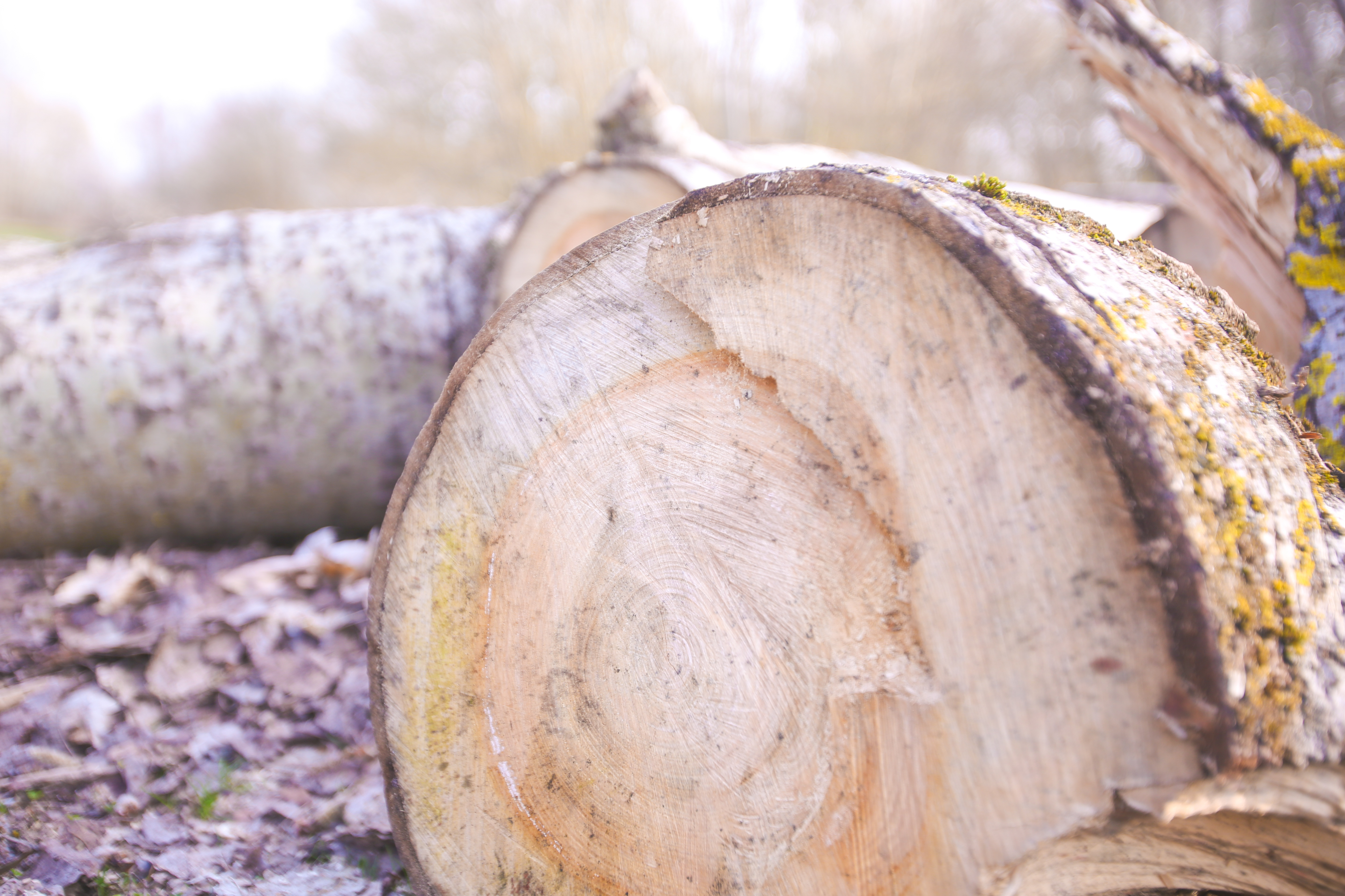Wood, Work, Forest, Cutting, Factory, HQ Photo