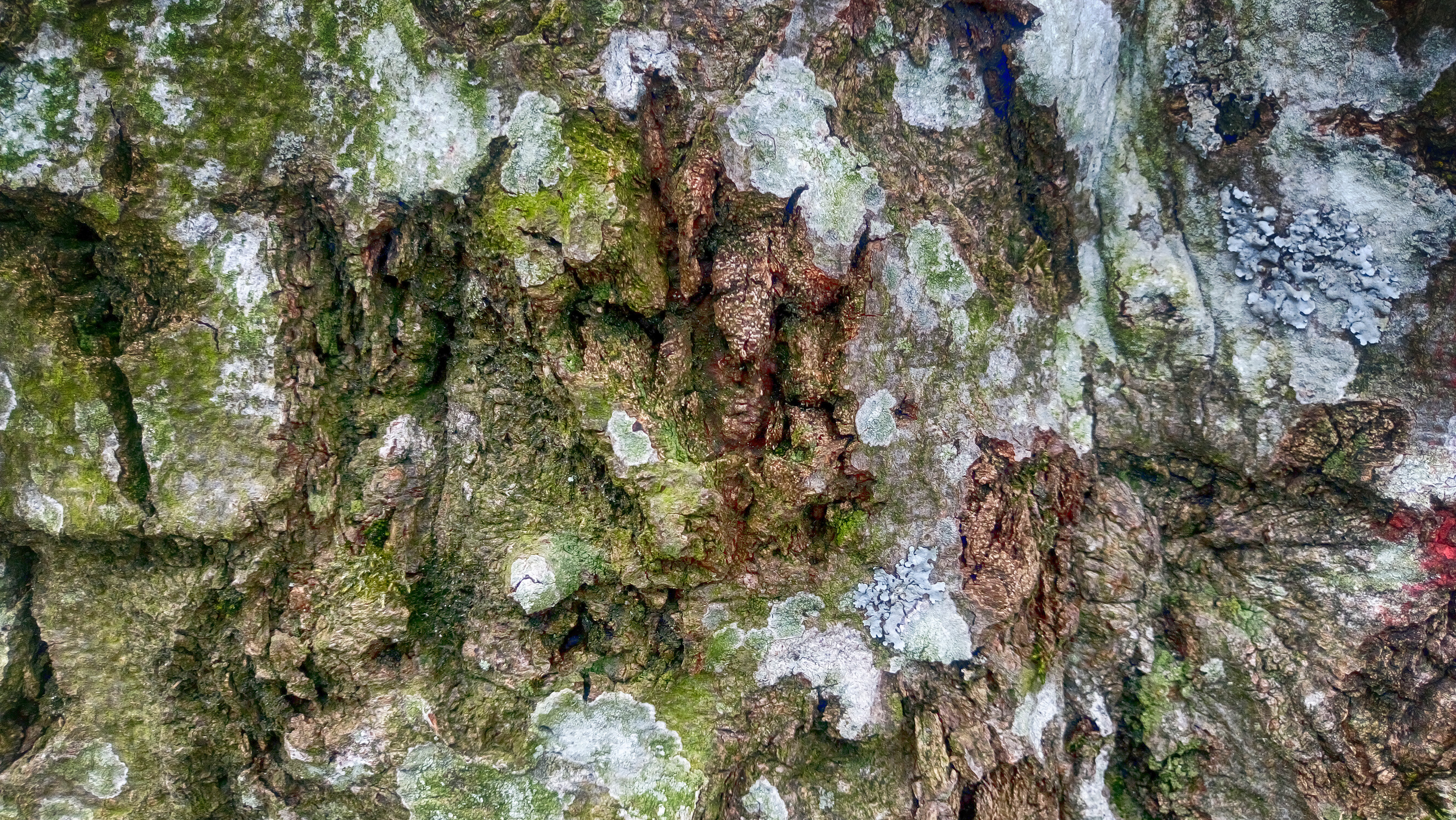 Wood, Macro, Texture, Tree, HQ Photo