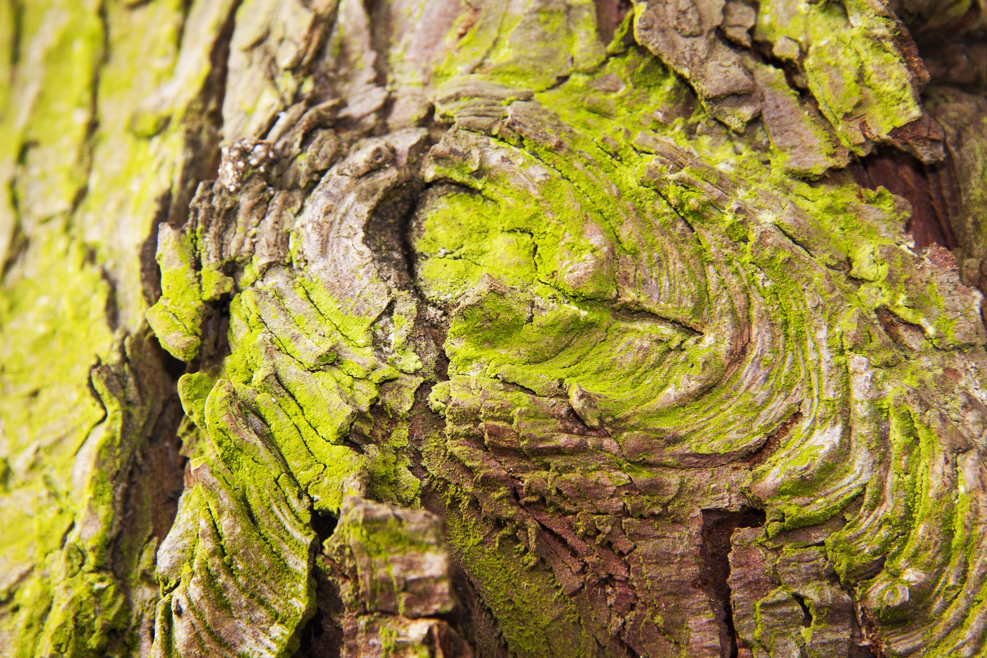 Wood bark photo