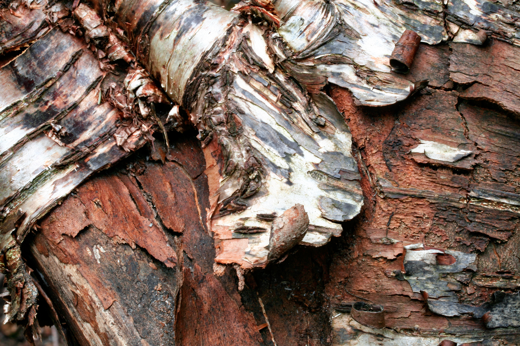 Wood Bark Texture, Backdrop, Texture, Red, Resource, HQ Photo