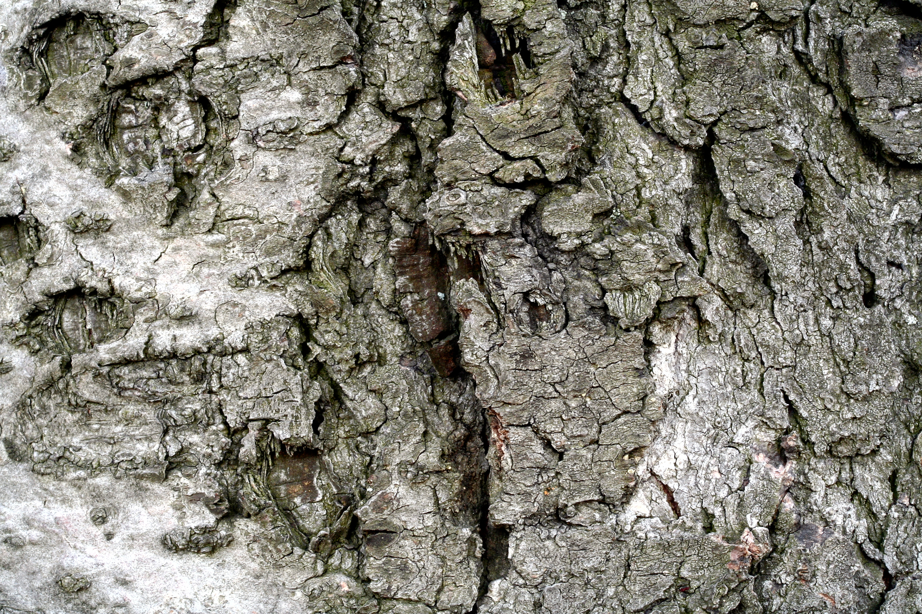 Wood Bark Texture, Backdrop, Picture, Wooden, Wood, HQ Photo