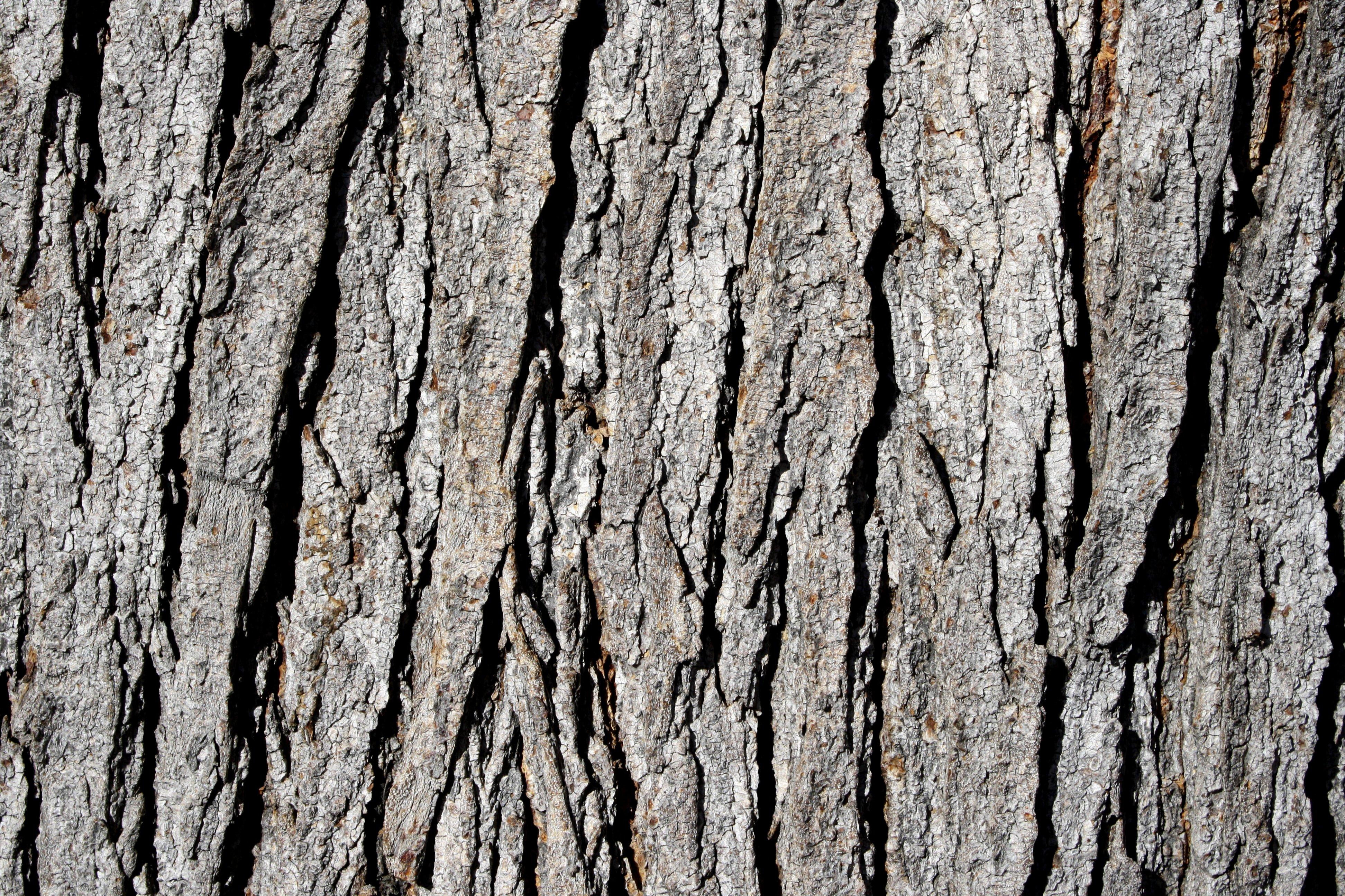 Tree Bark Texture Picture | Free Photograph | Photos Public Domain