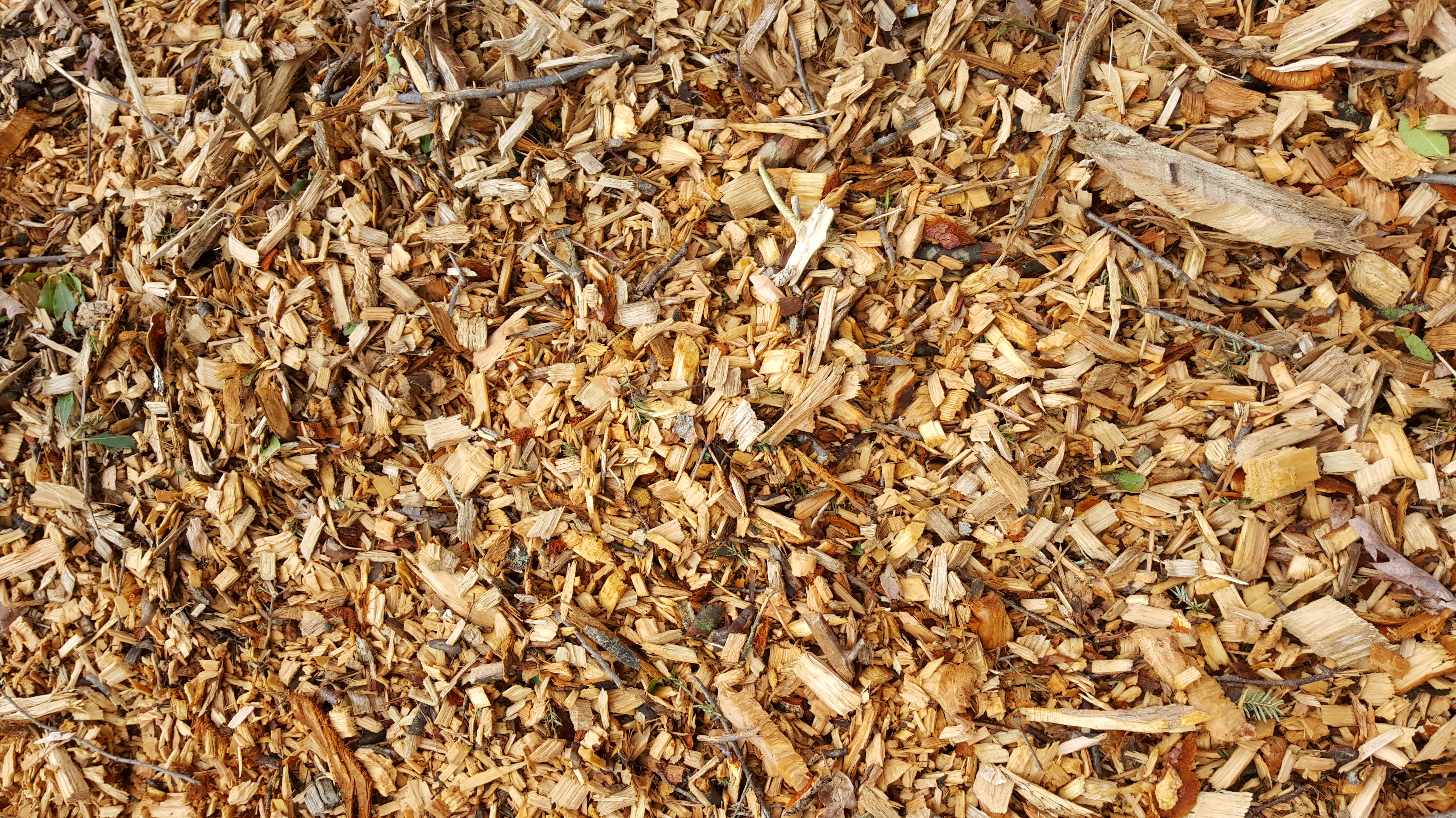 Wood chips fresh locally cut natural wood chips. Light in color.