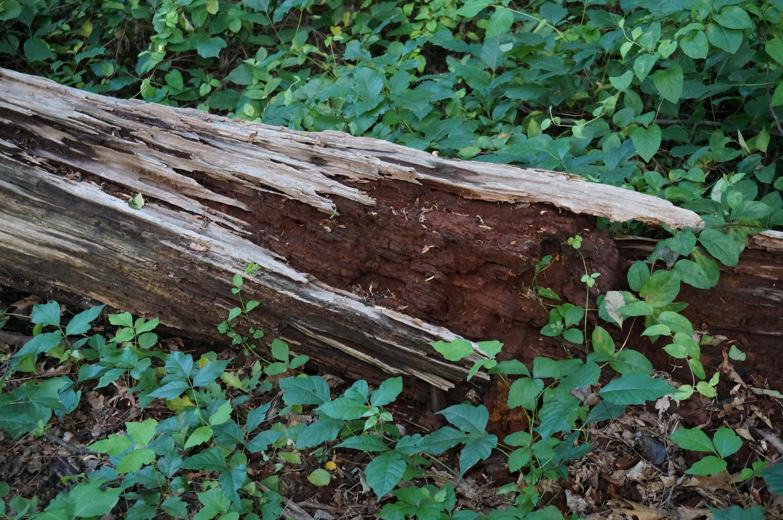 Wood decomposition photo