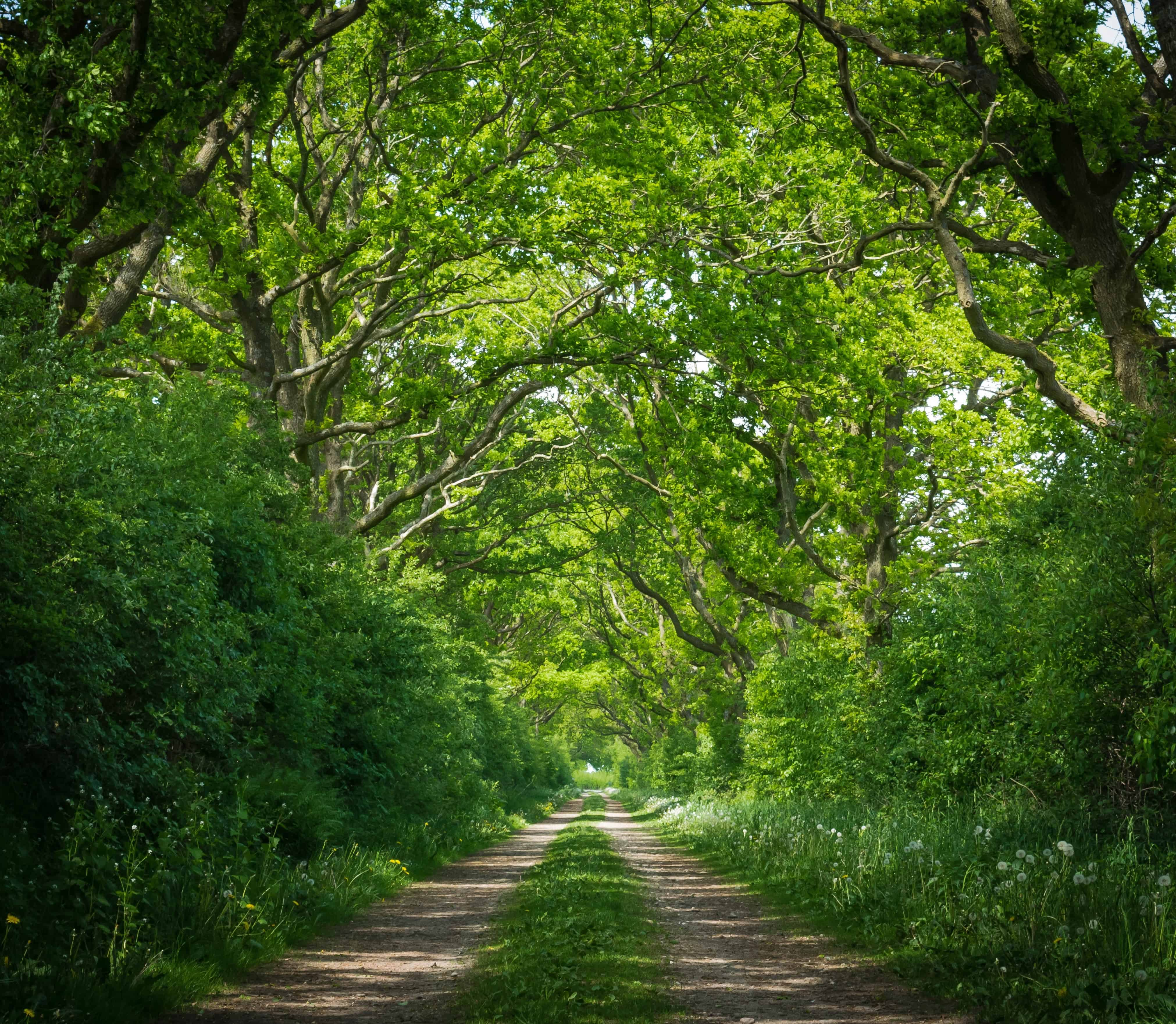 Free photo: Wood landscape - Forest, Green, Hills - Free ...