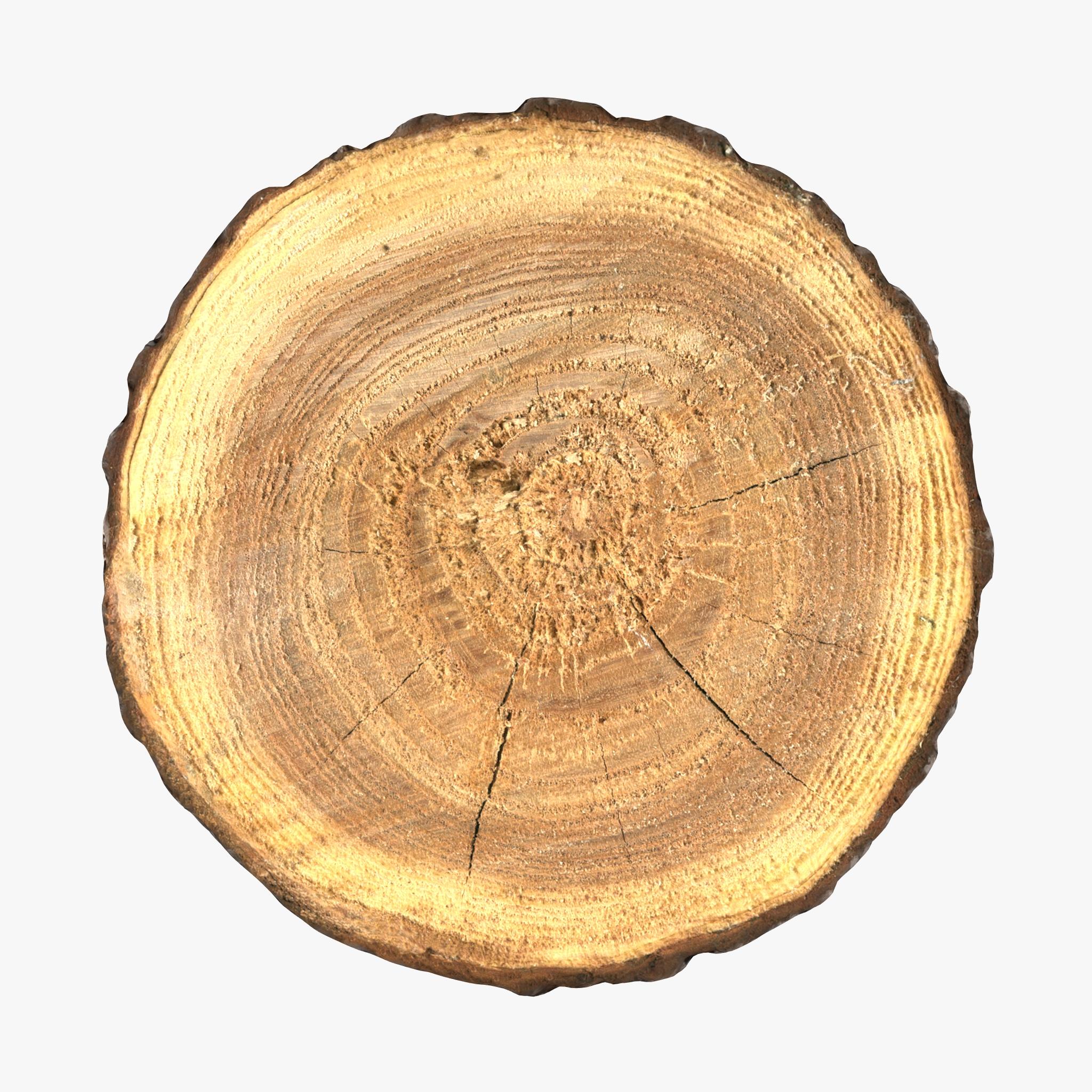 Wood Log Slice by 3D_PikNik | 3DOcean