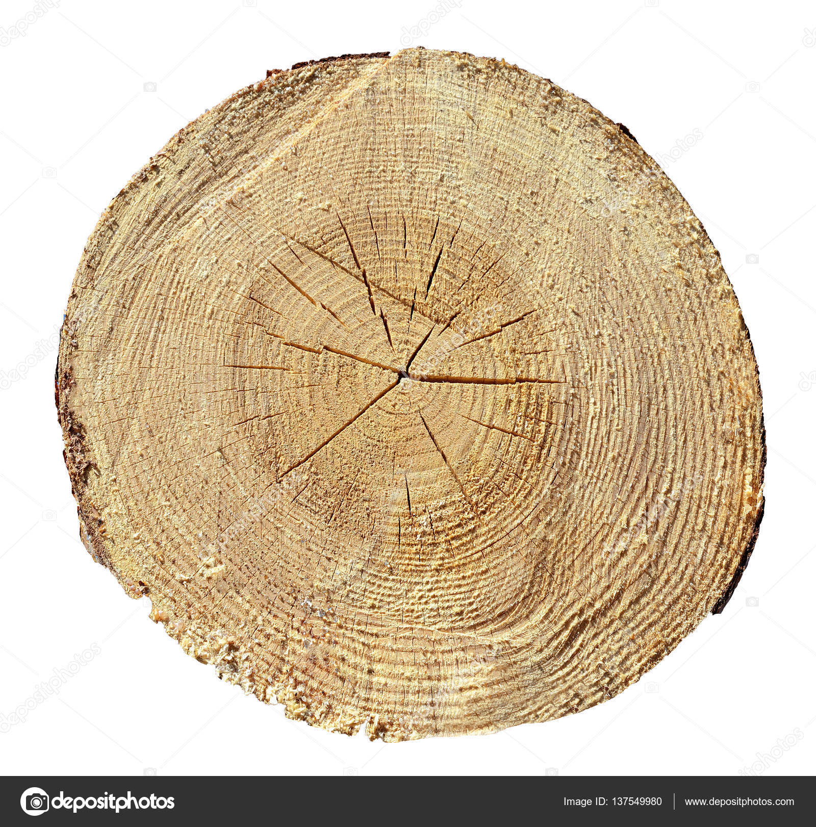 Tree Rings, Wood, log. Wooden texture — Stock Photo © Interpas ...