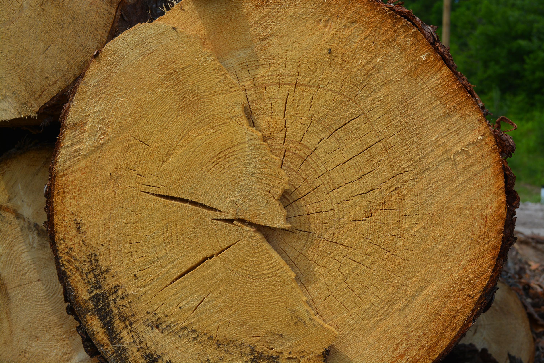 Wood log, Aging, Round, Raw, Renewable, HQ Photo