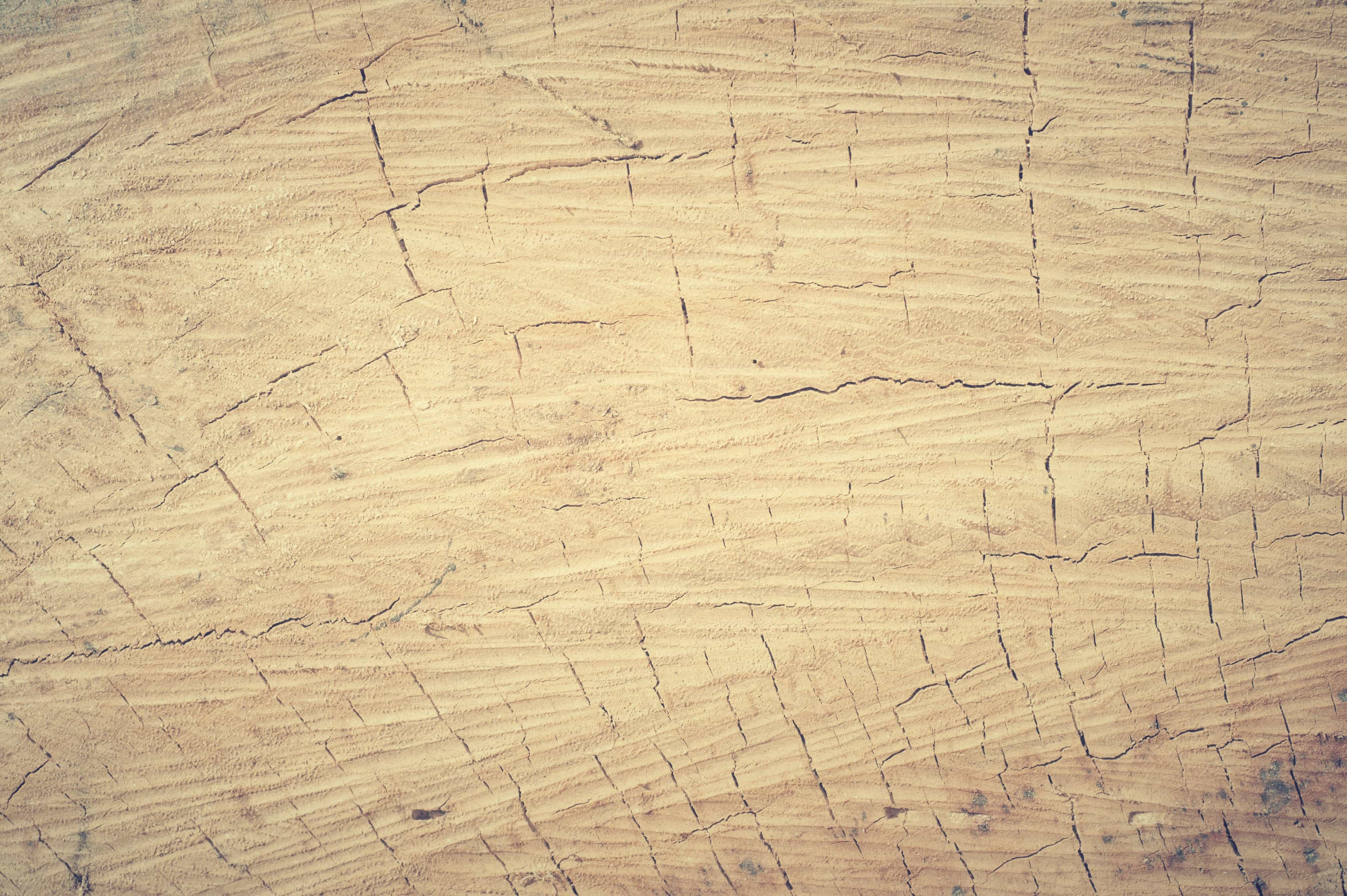 Free picture: pattern, dirty, hardwood, old, texture, wood, surface