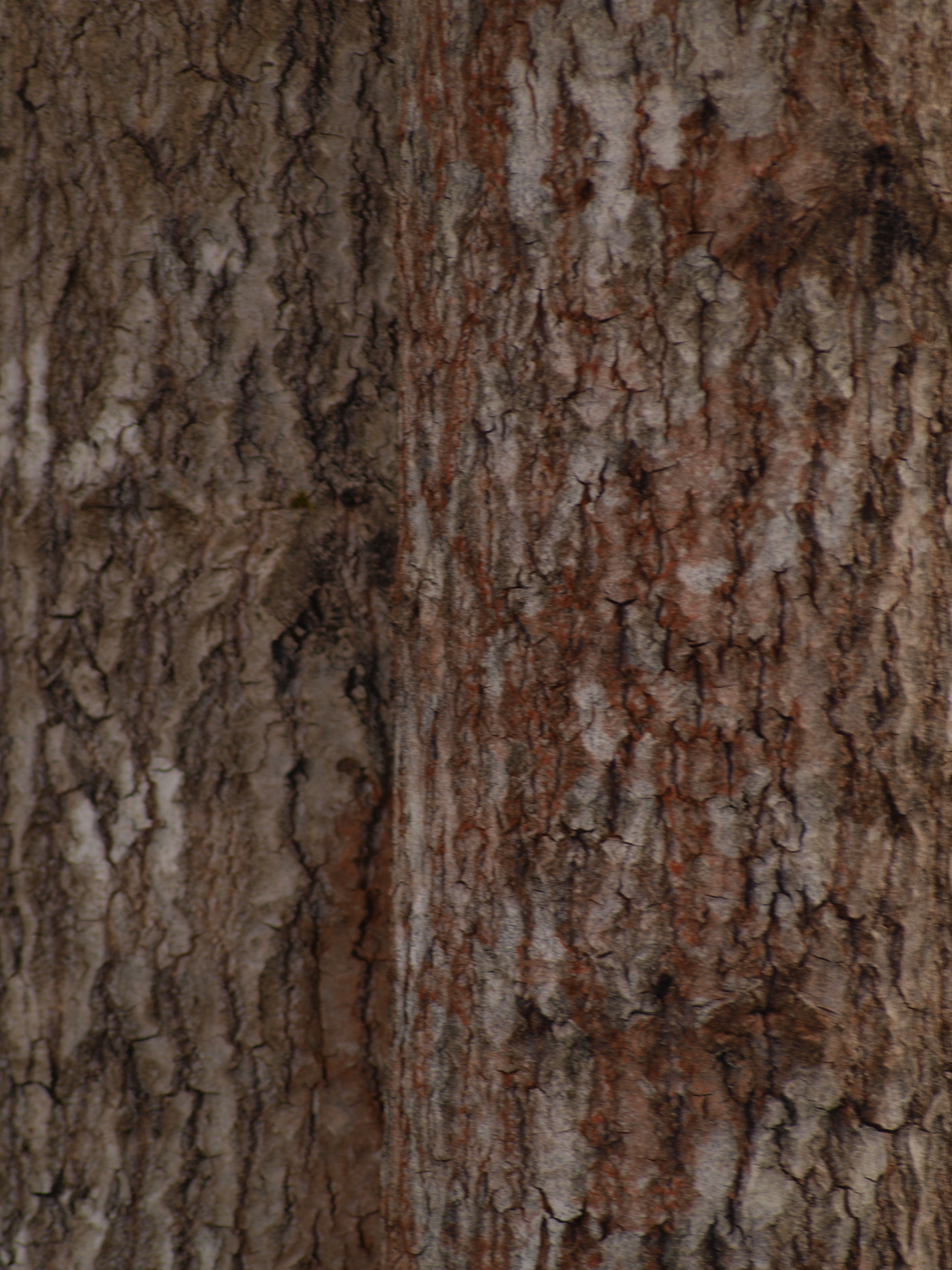 Wood Texture, Hard, Nature, Plant, Texture, HQ Photo