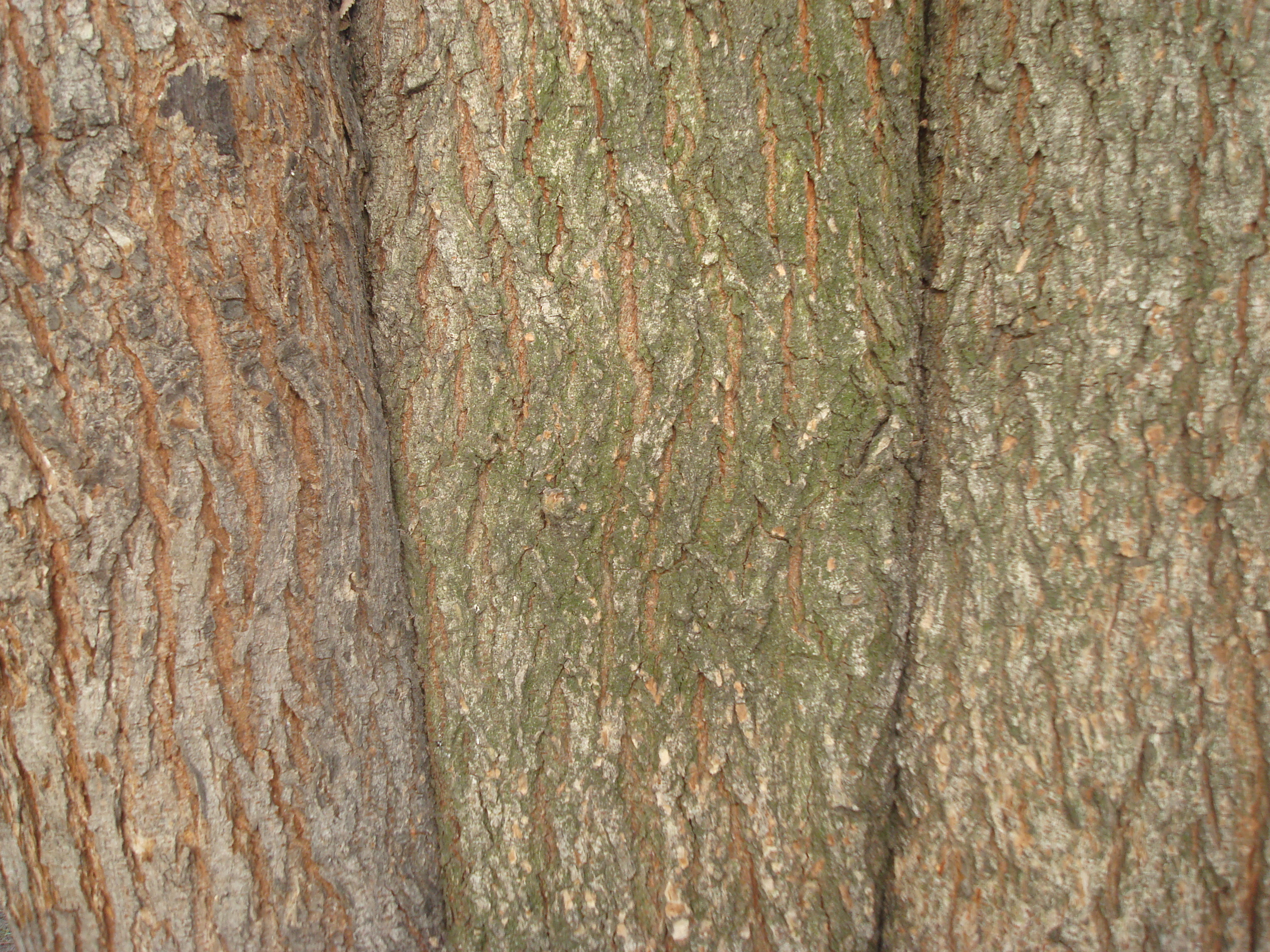 Wood texture, Brown, Flora, Floral, Forest, HQ Photo