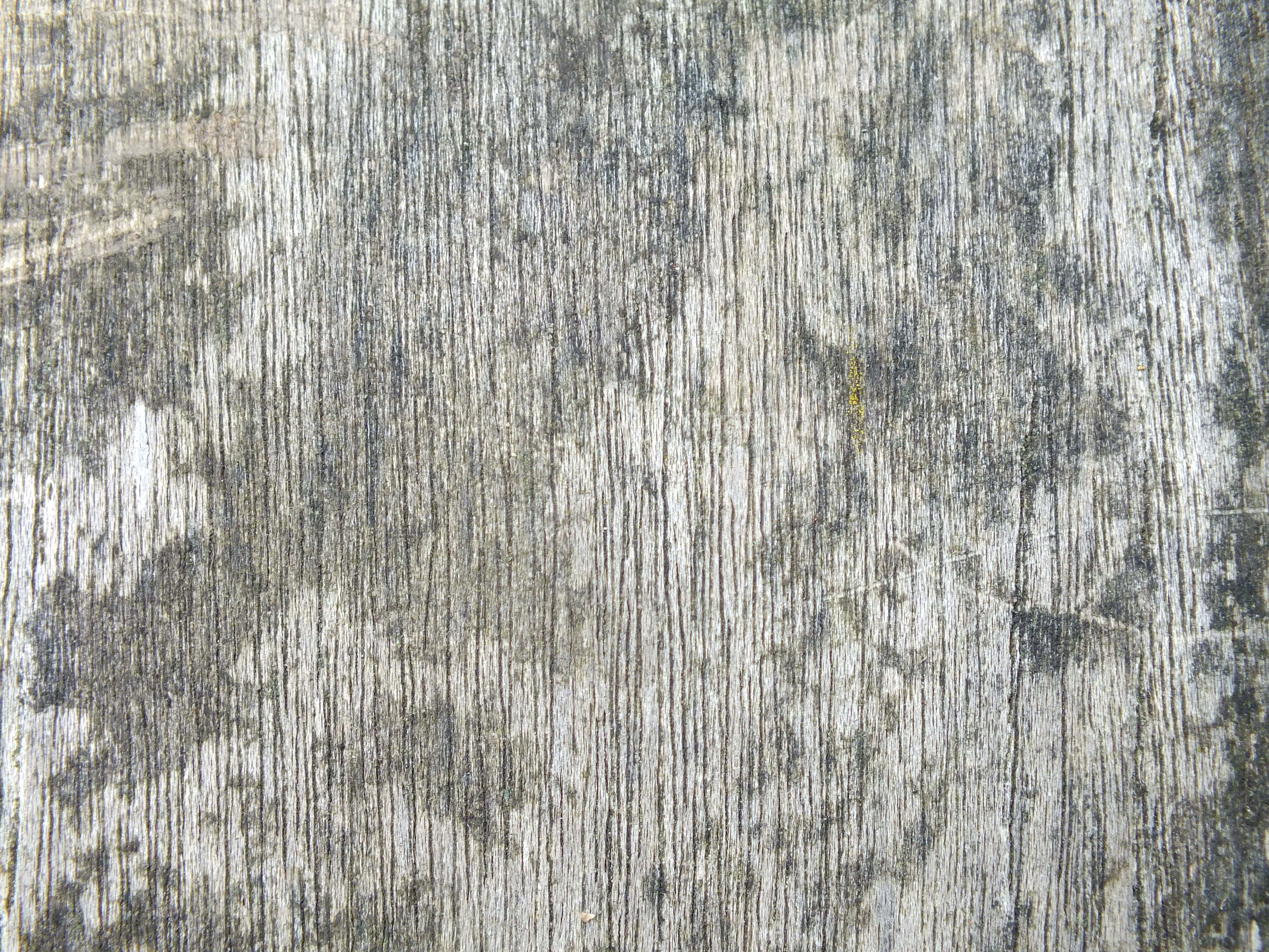 Wood texture, Board, Texture, Tree, Wood, HQ Photo