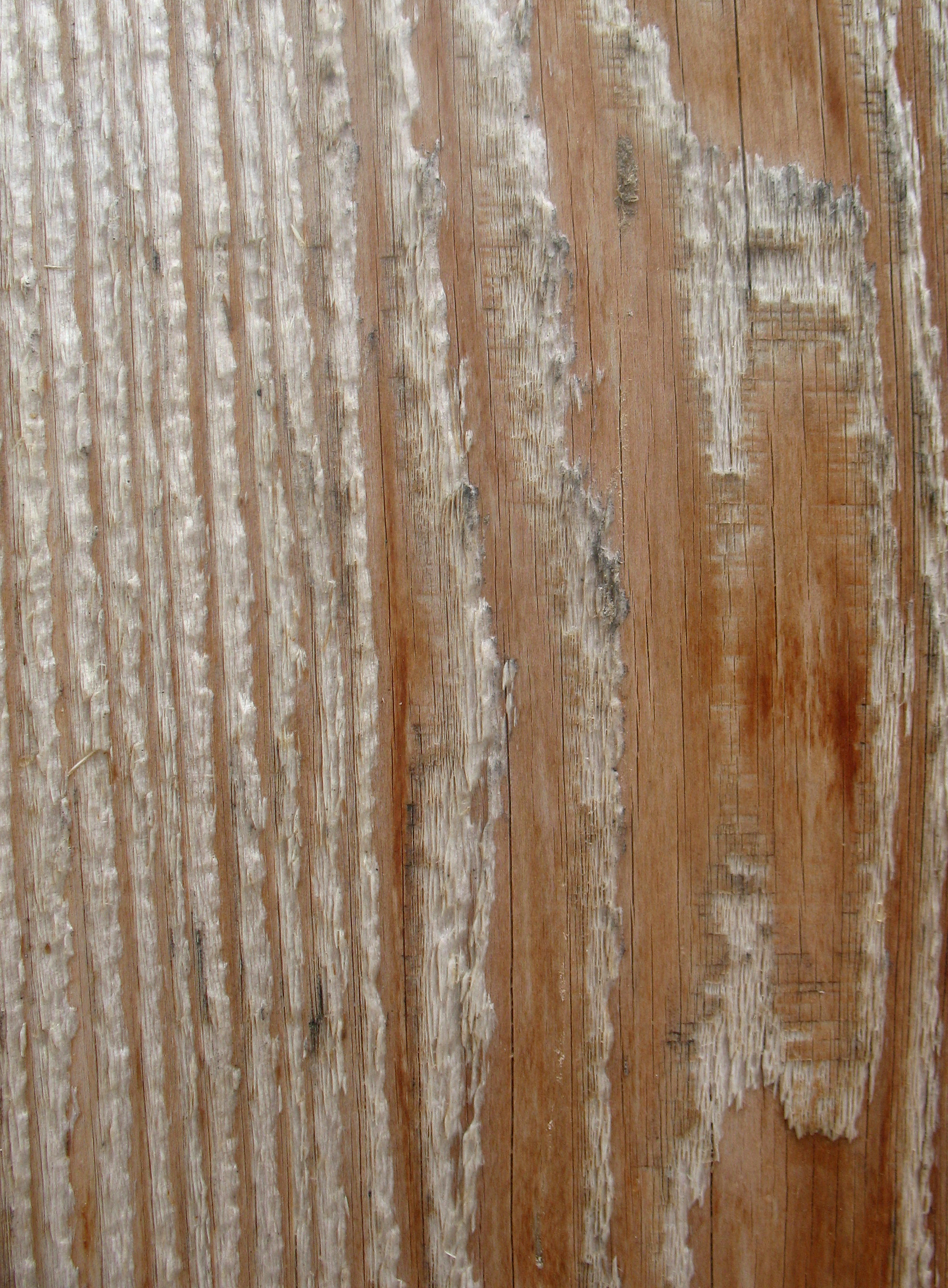 Wood Texture, Board, Cracked, Freetexturefrida, Surface, HQ Photo