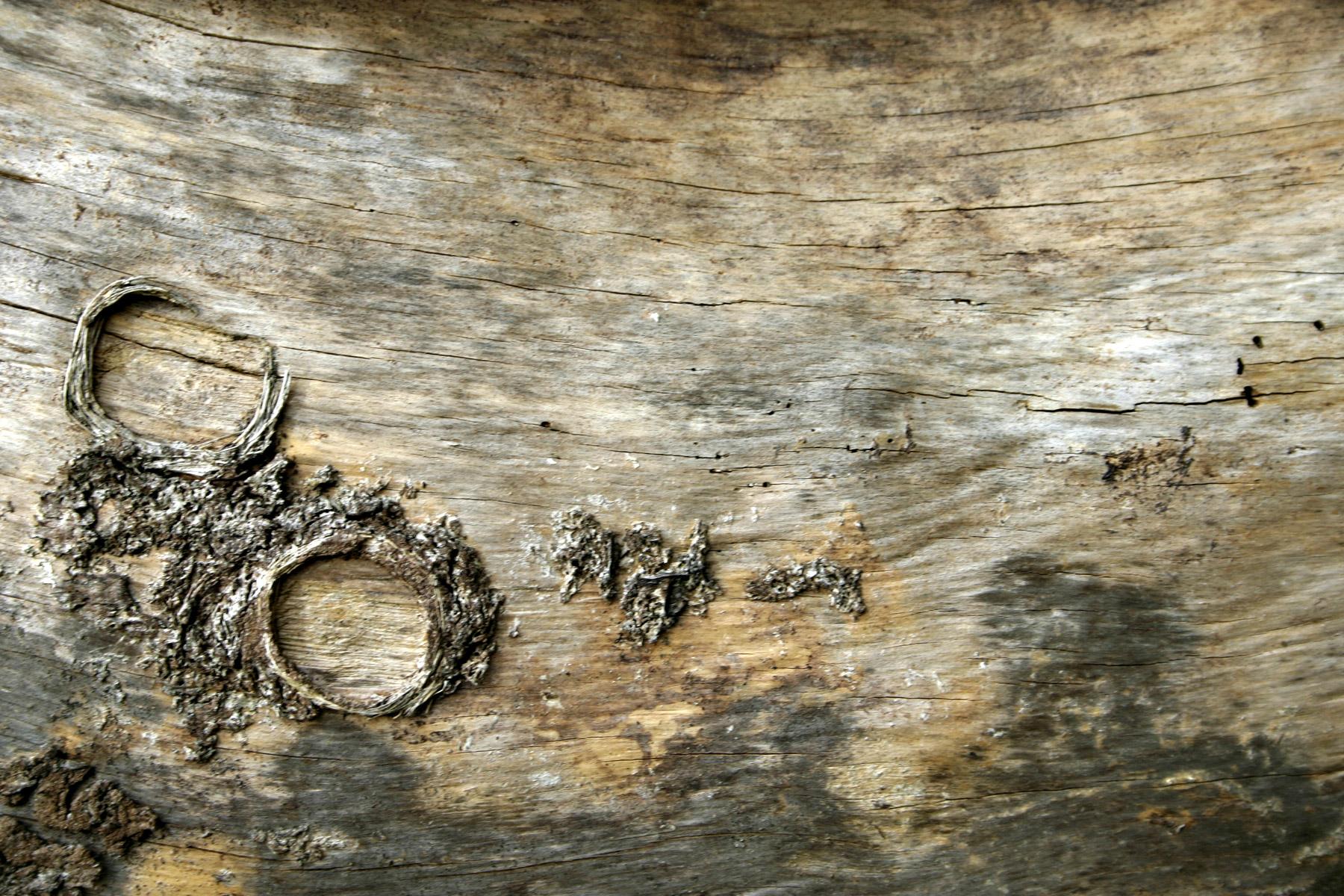 Wood texture, Bark, Cracked, Nature, Texture, HQ Photo