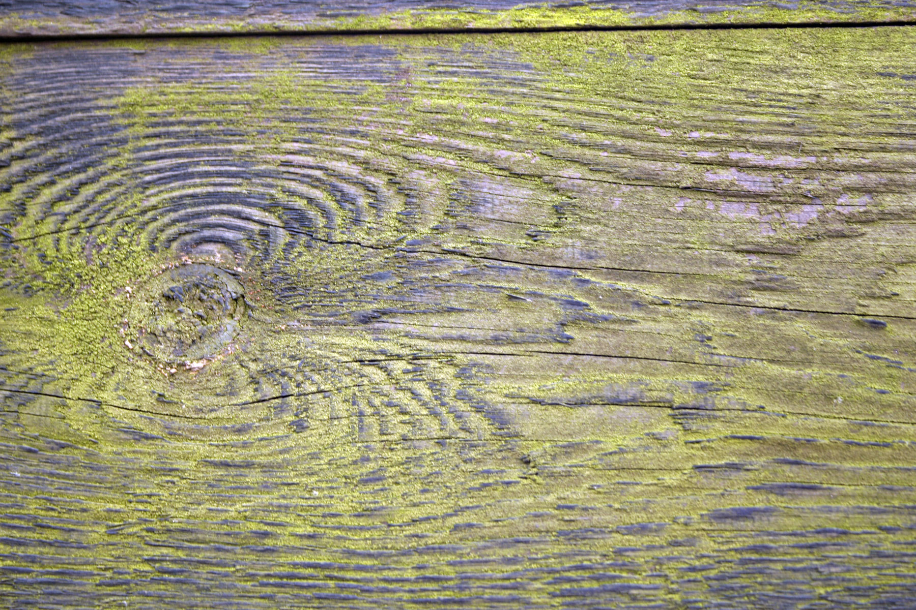 Wood texture, Green, Surface, Texture, Timber, HQ Photo