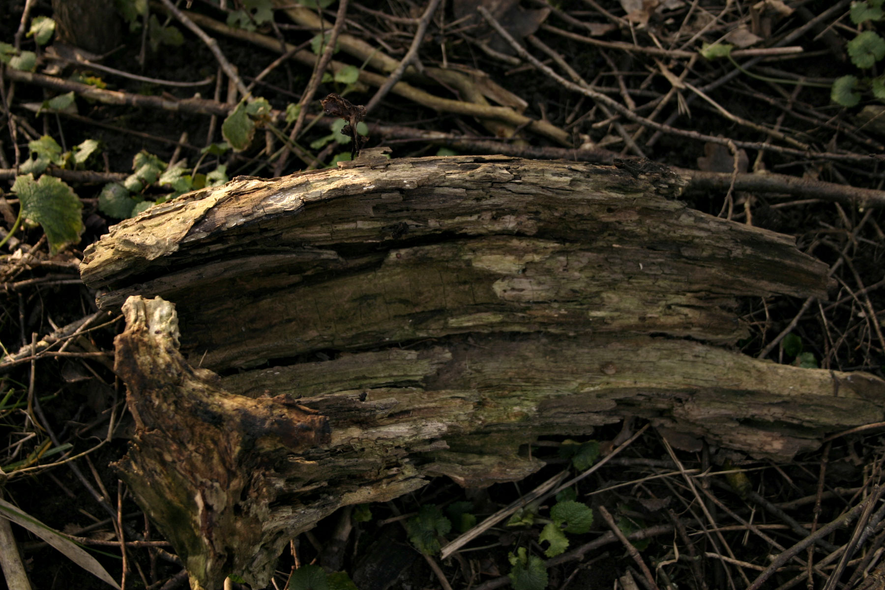 Wood texture, Surface, Texture, Timber, Tree, HQ Photo