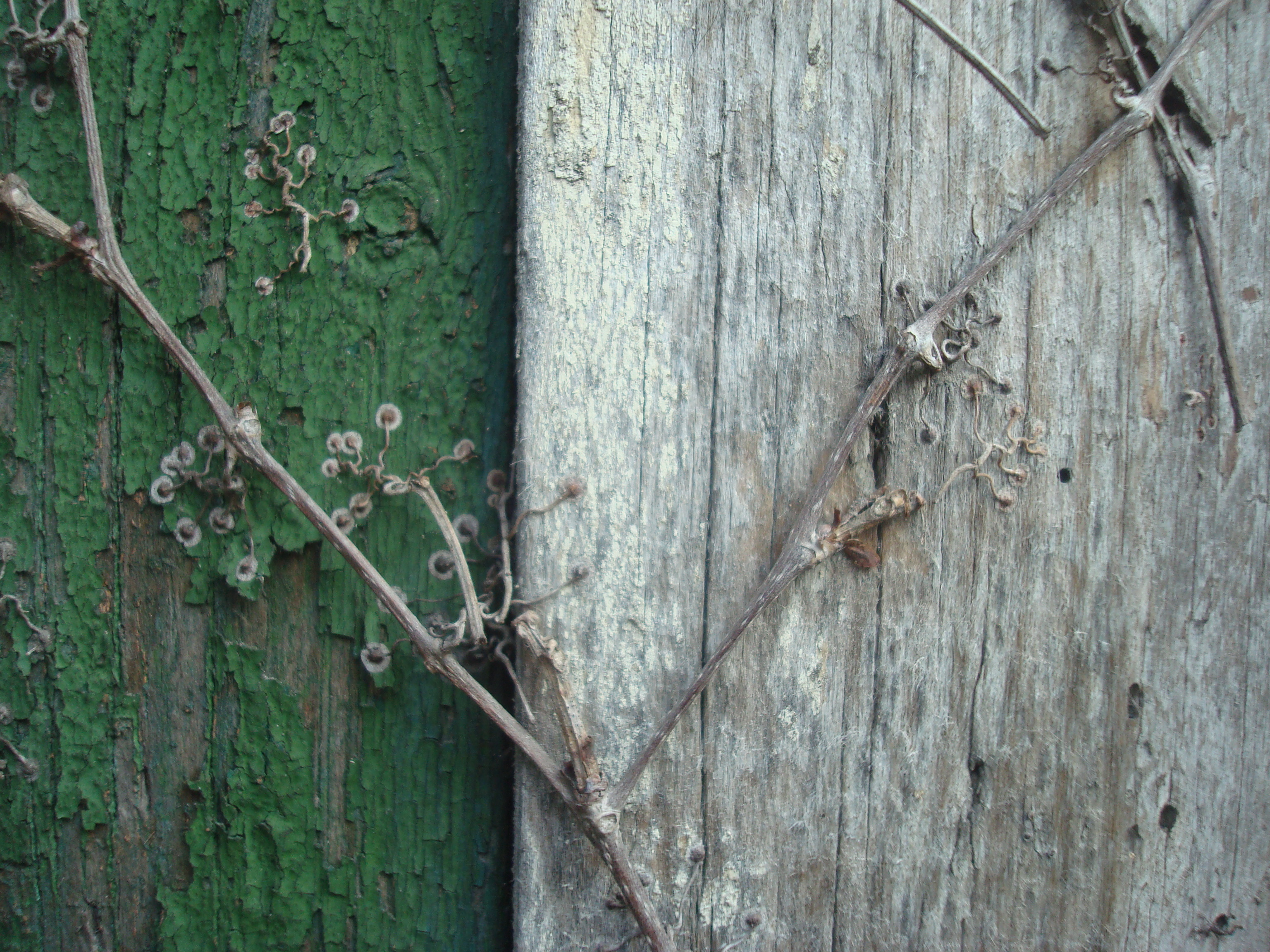 Wood wall texture, Green, Old, Plant, Texture, HQ Photo